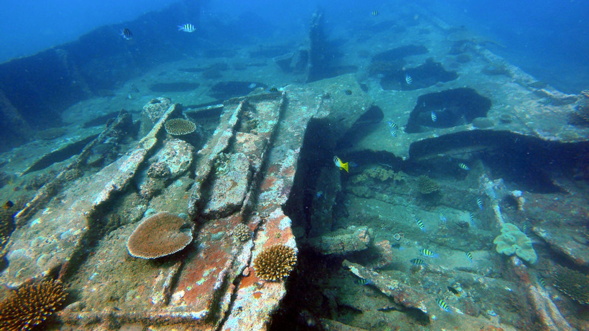 Best time for Diving the North East Coast in Sri Lanka 2019