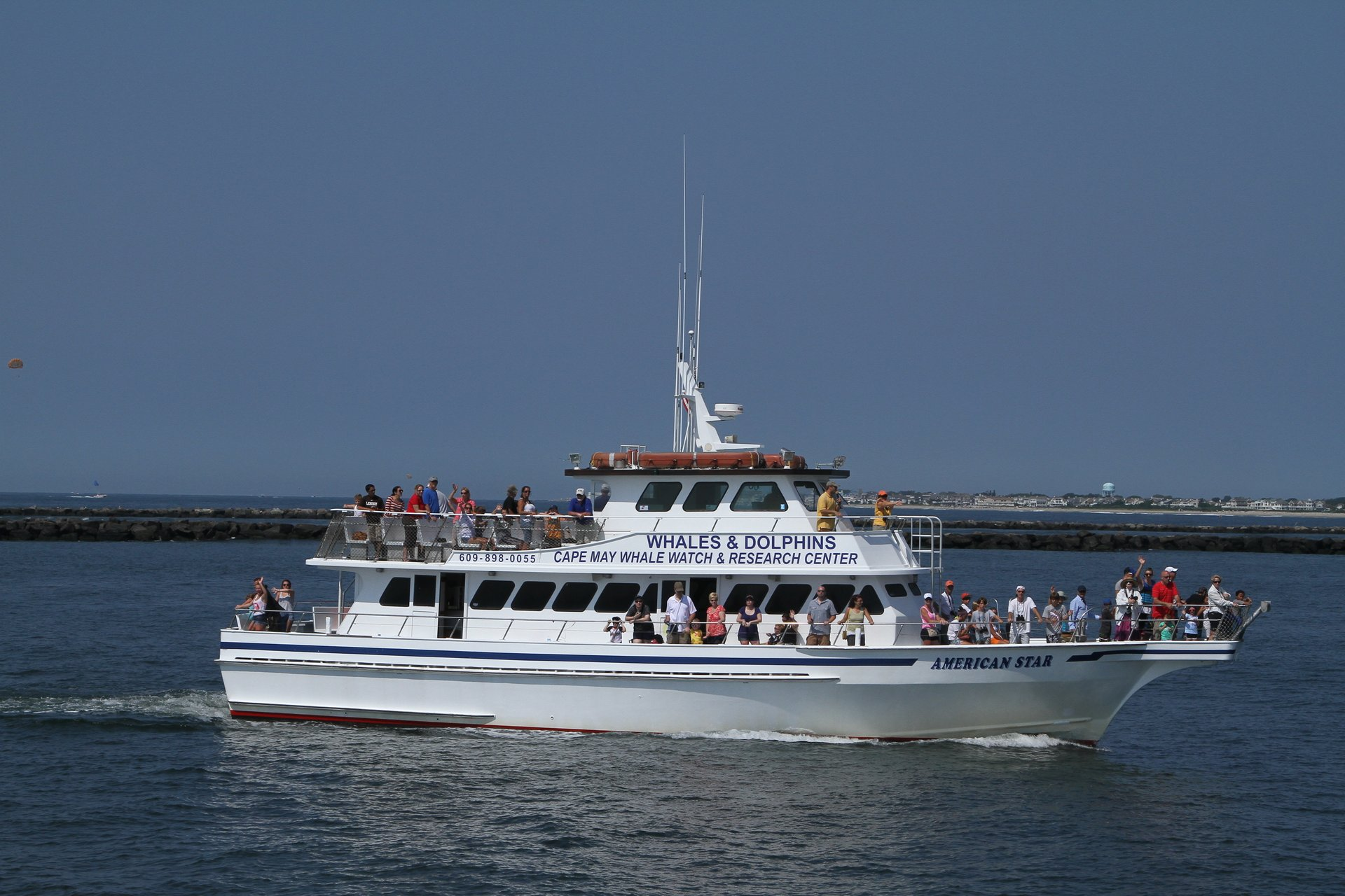Dolphin & Whale Watching in New Jersey - Best Season 2020