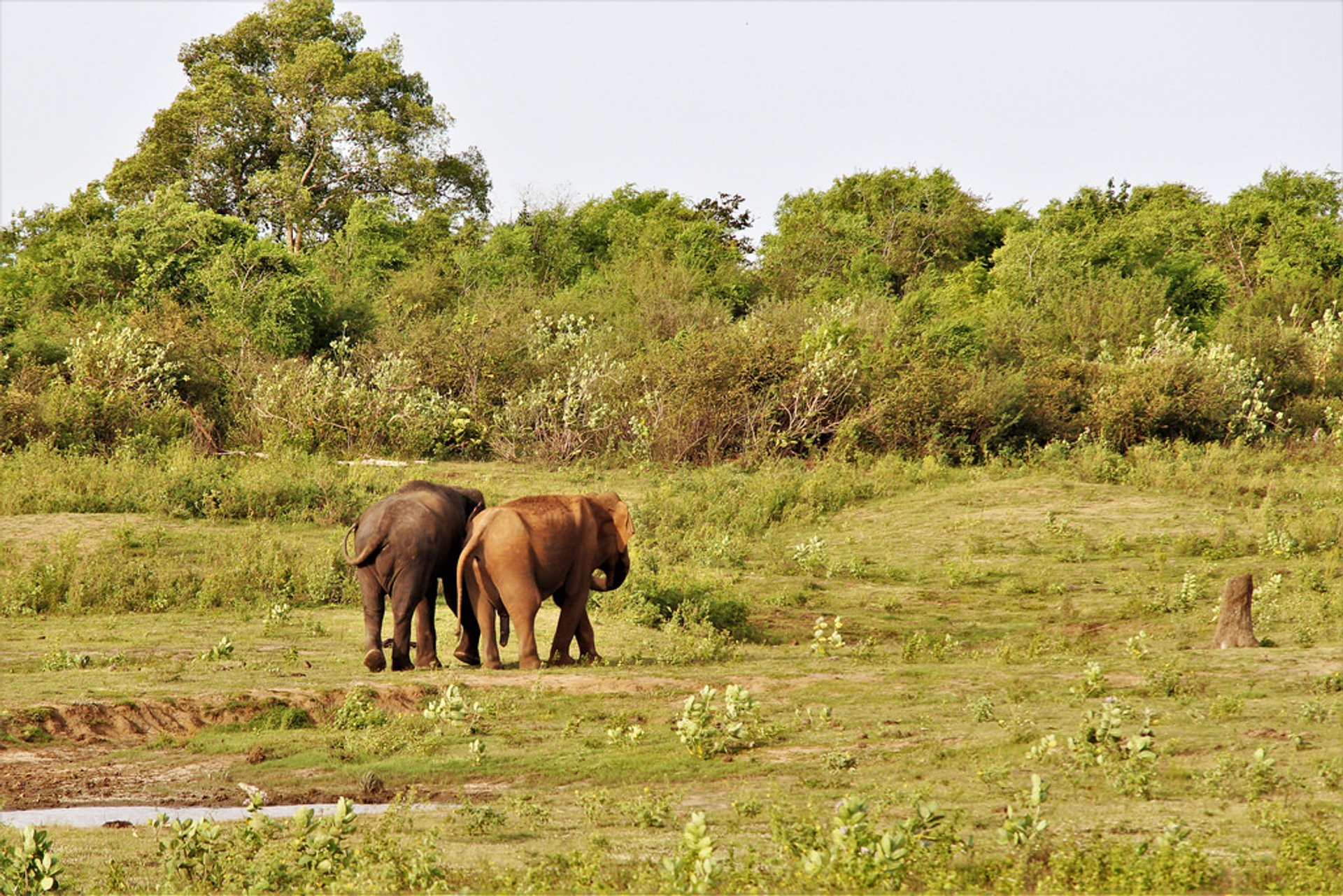 Best time for Elephant Safari in Udawalawe National Park in Sri Lanka 2020