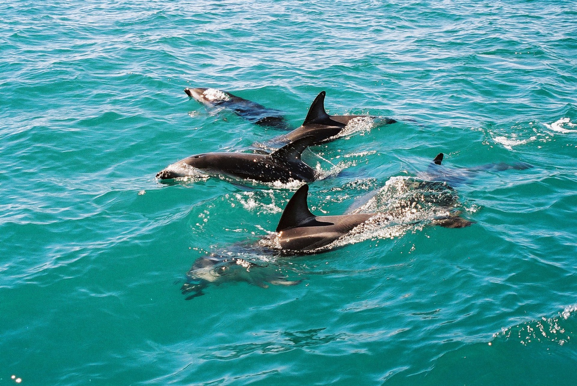 Dolphin Encounter in New Zealand 2019 - Best Time