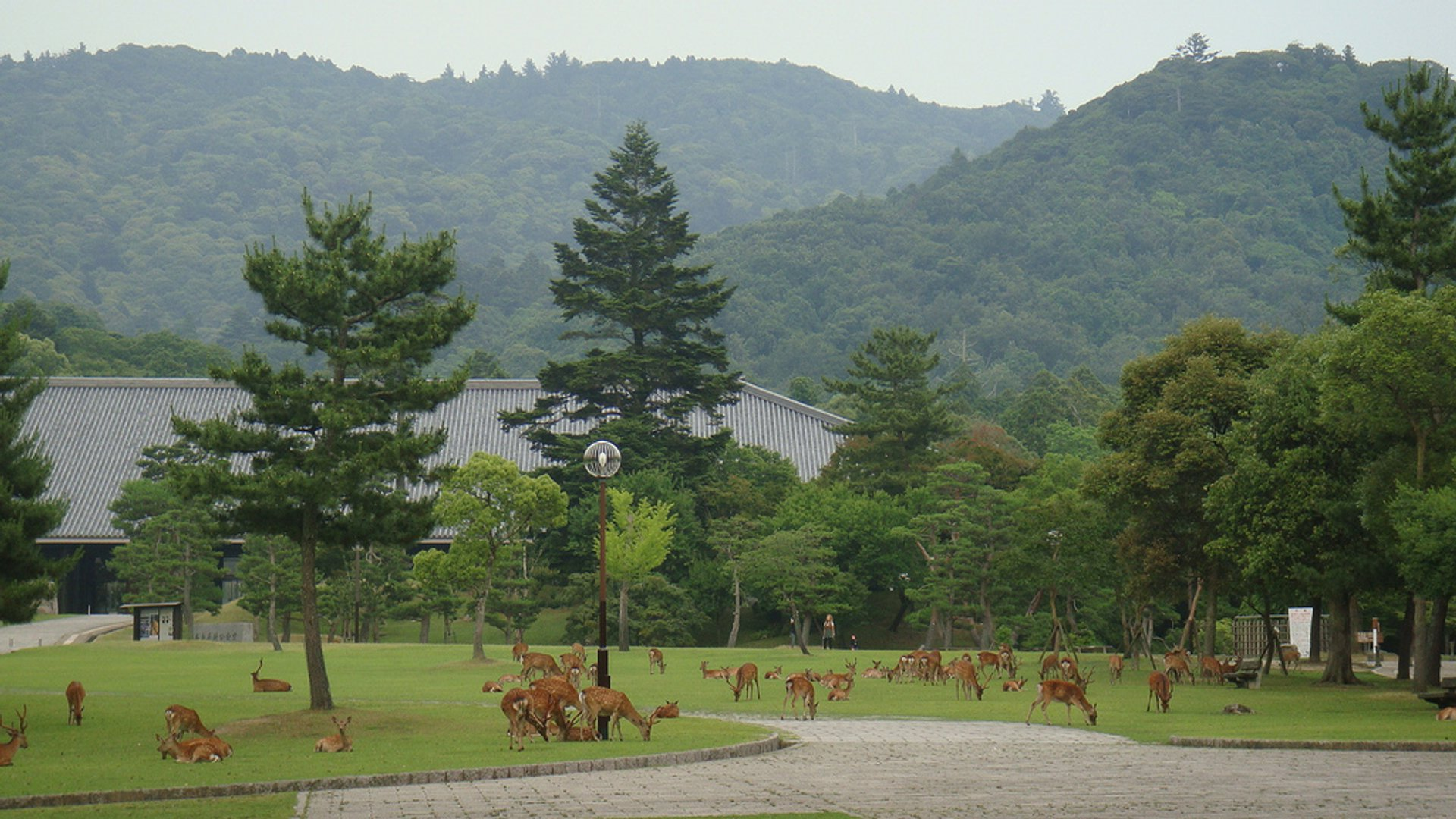 Baby Deer at Nara Park in Japan - Best Season 2020