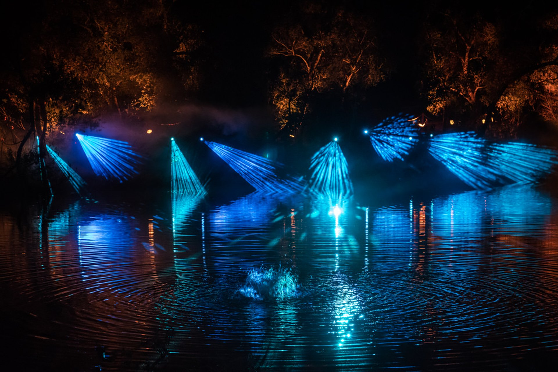 Best time to see Enchanted: Forest of Light 2020