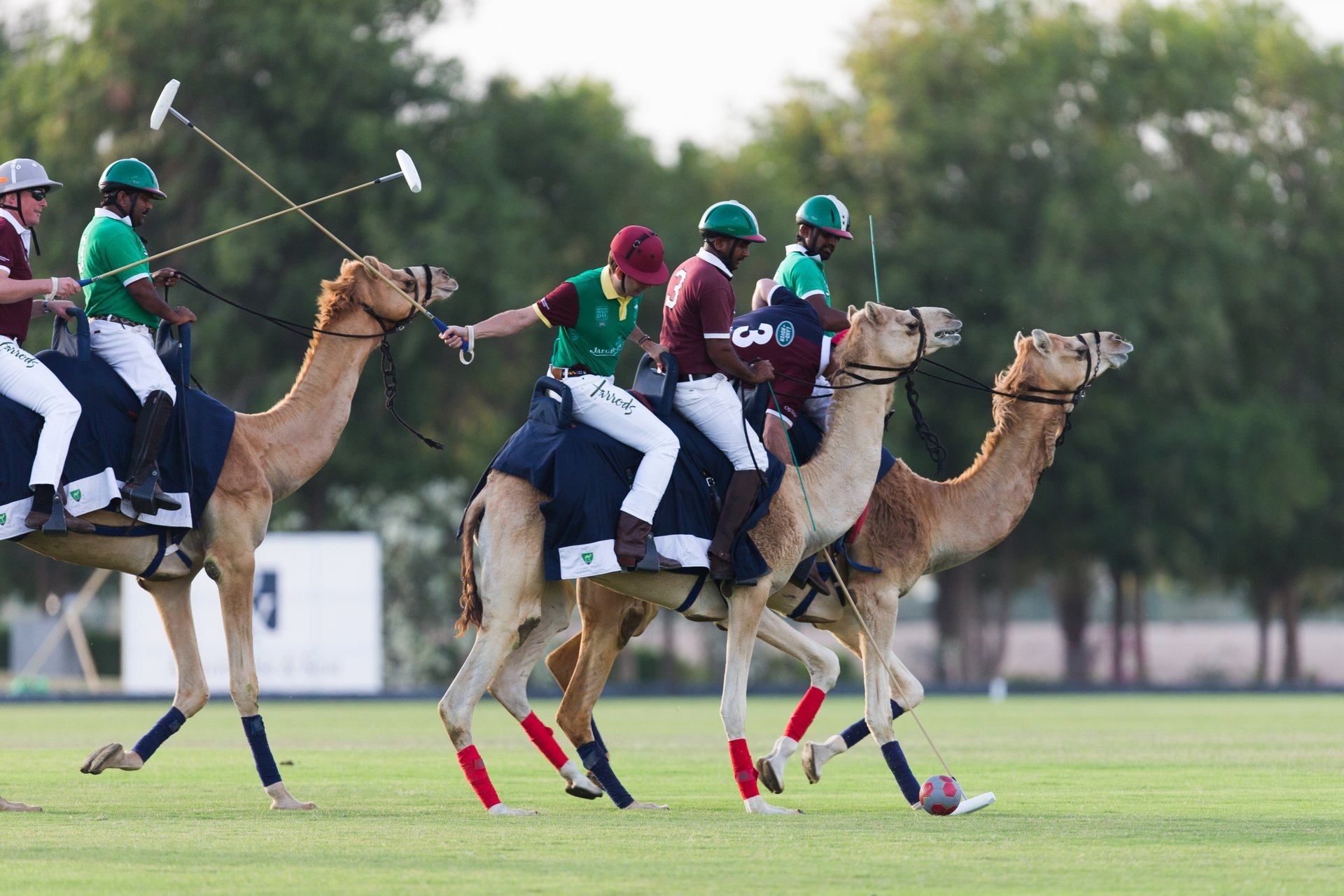 Polo Season in Dubai 2020 - Best Time