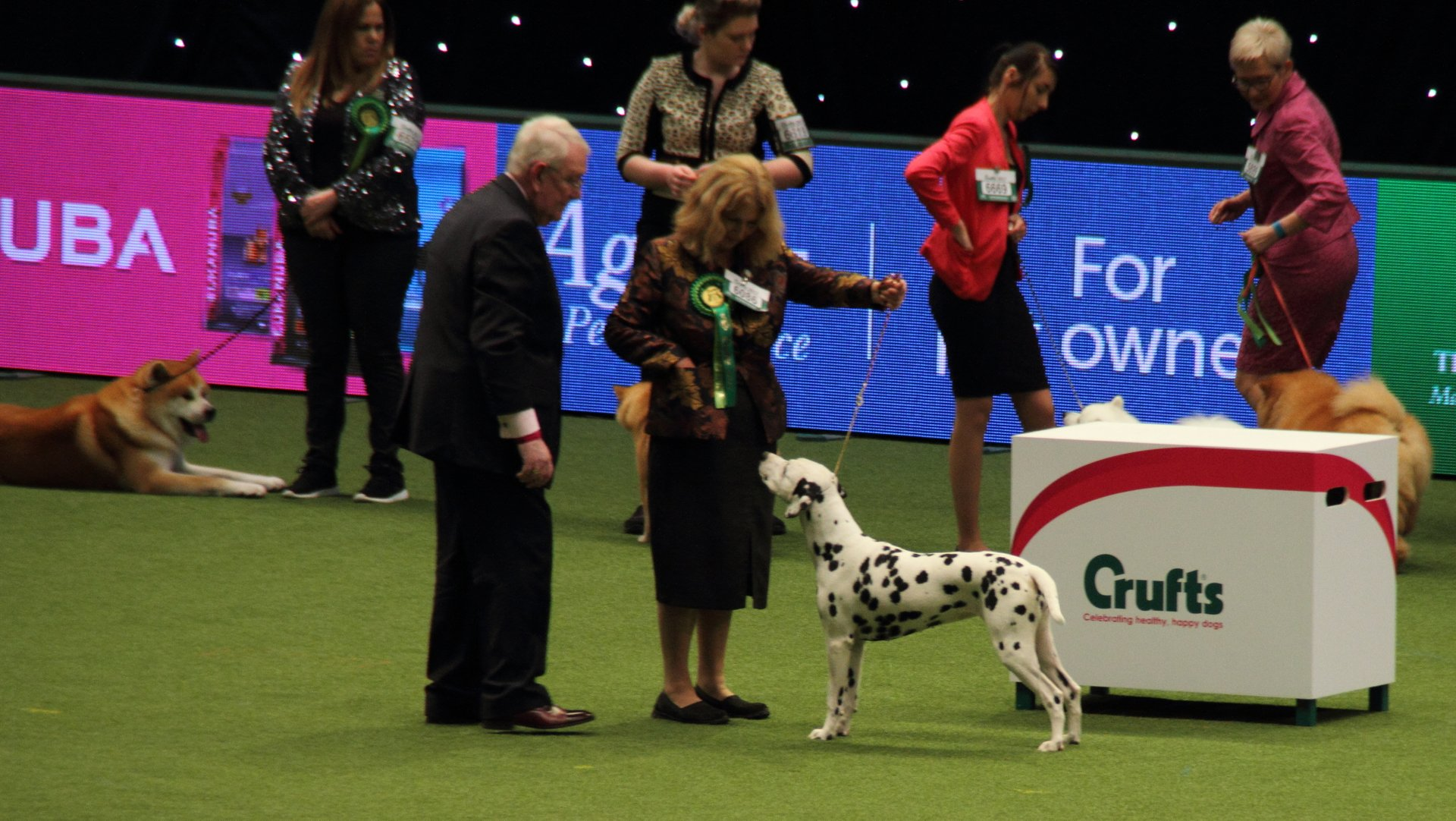 Crufts in England - Best Season 2020