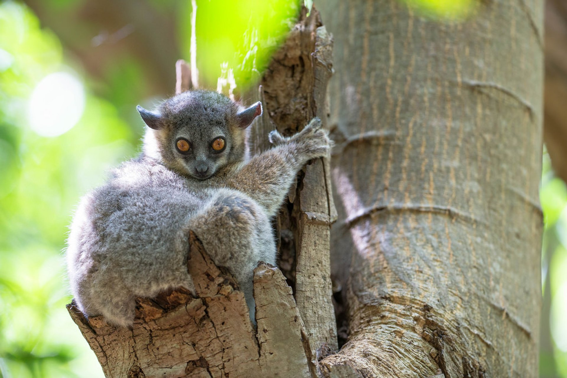 Baby Lemurs in Madagascar 2019 - Best Time