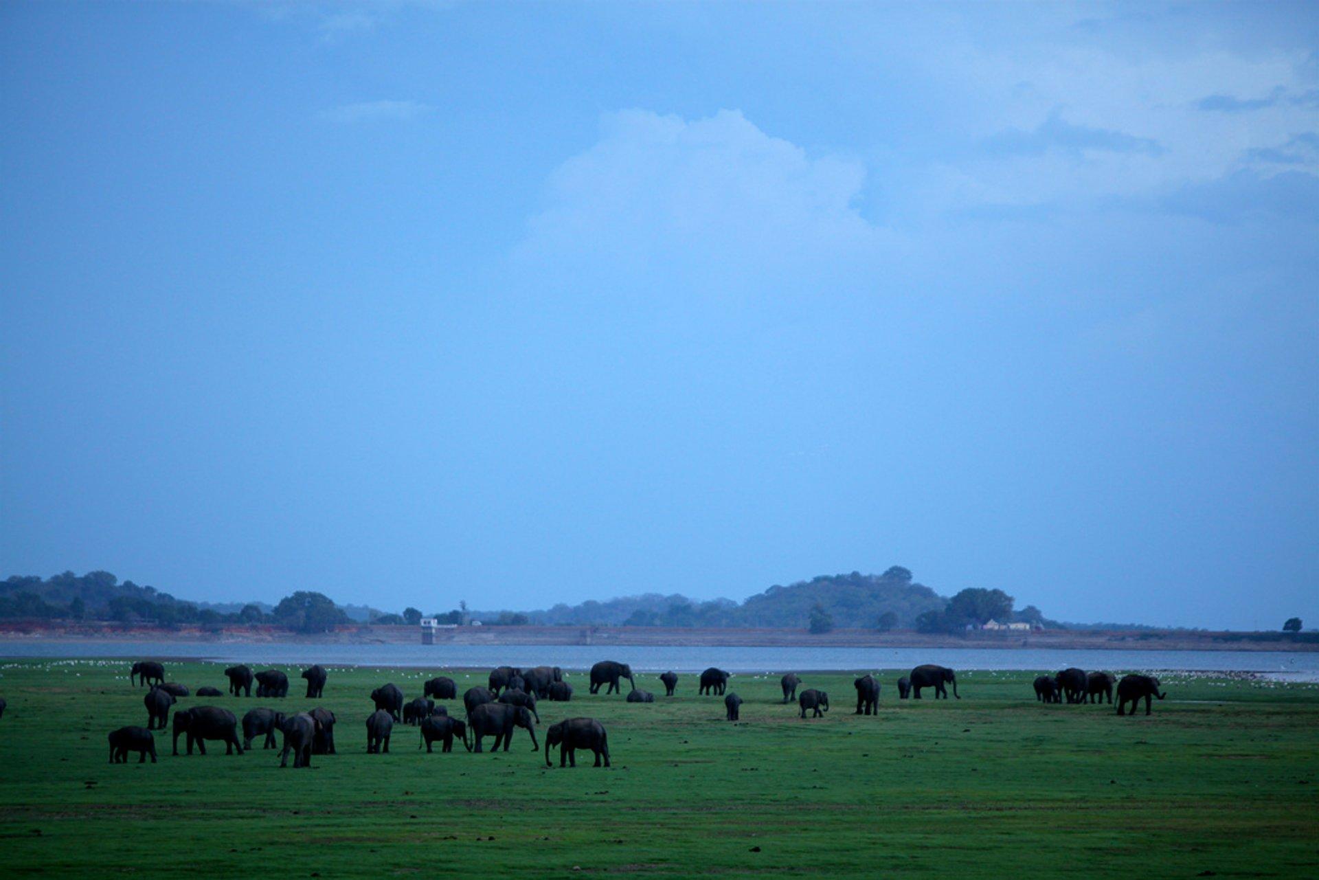 Best time for Elephant Gathering in Sri Lanka 2020