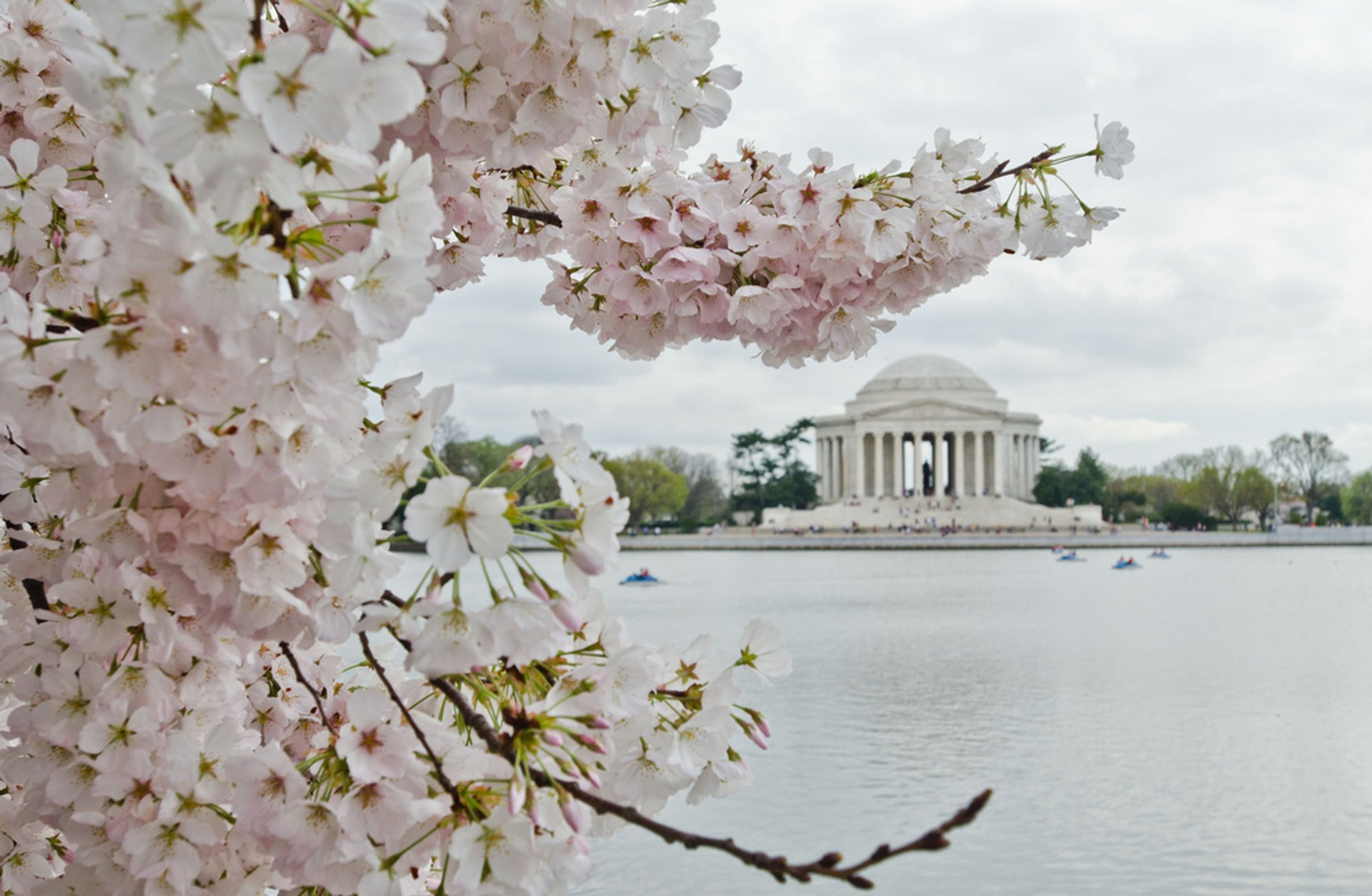 Cherry Blossoms in Washington, D.C. - Best Time