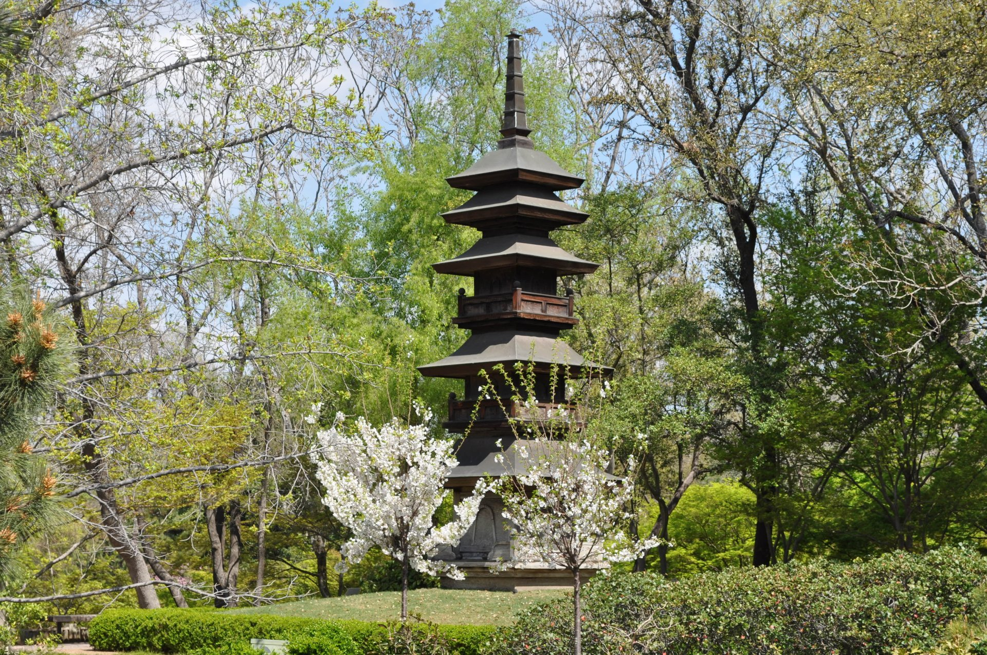 Japanese Garden in Fort Worth 2020