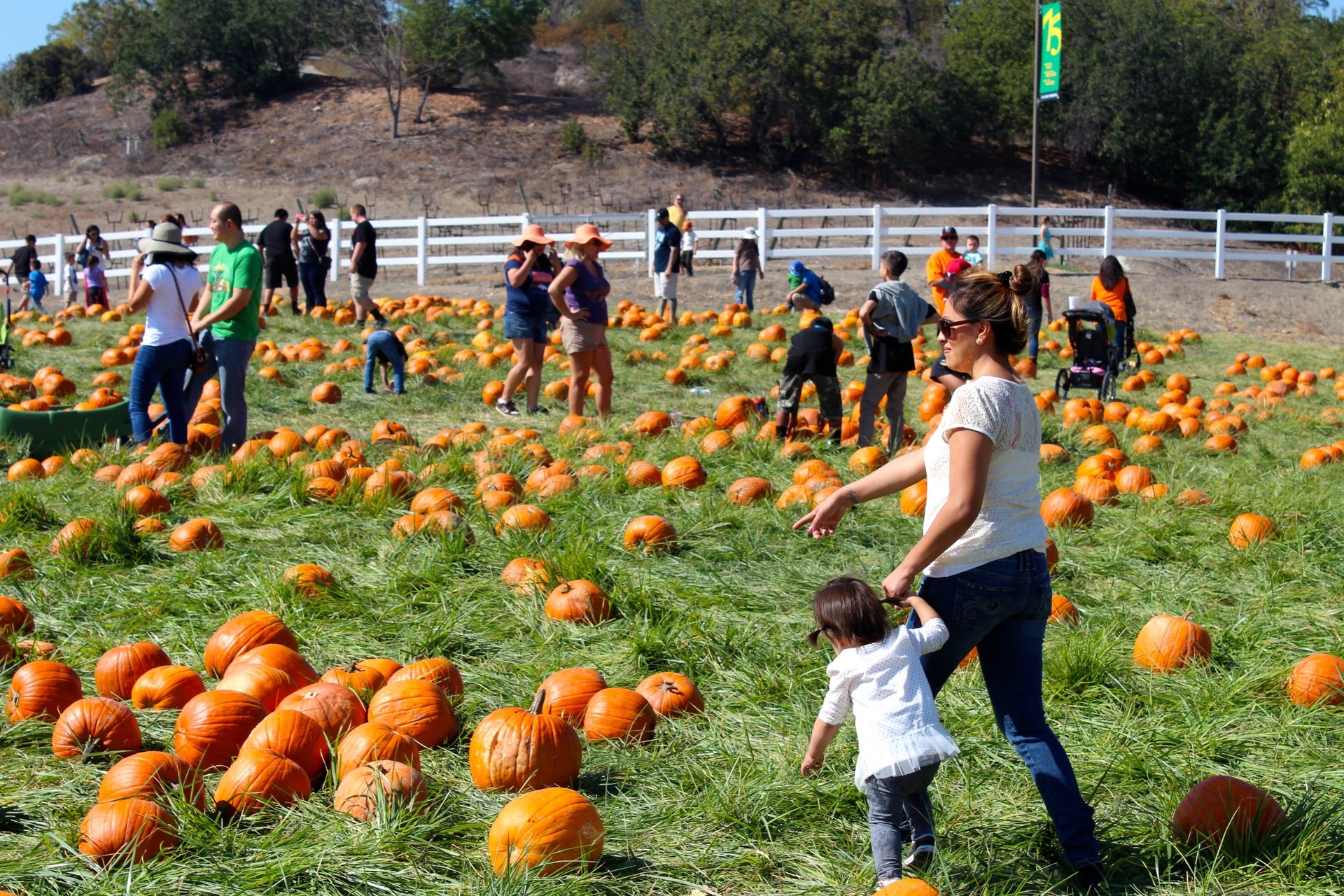 Cal Poly Pomona Pumpkin Festival in Los Angeles 2020 - Best Time