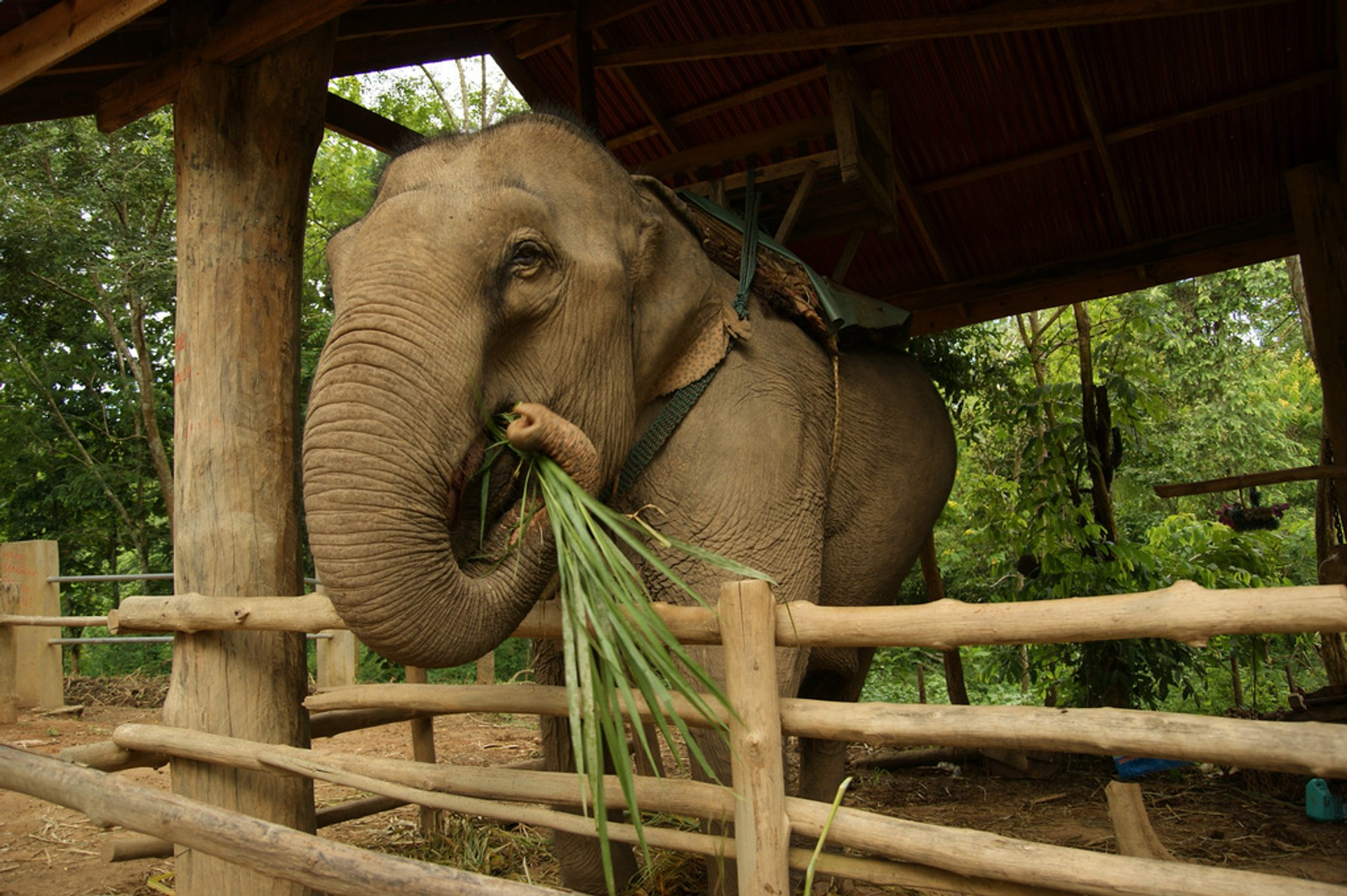 Caring for an Elephant in Laos 2020 - Best Time