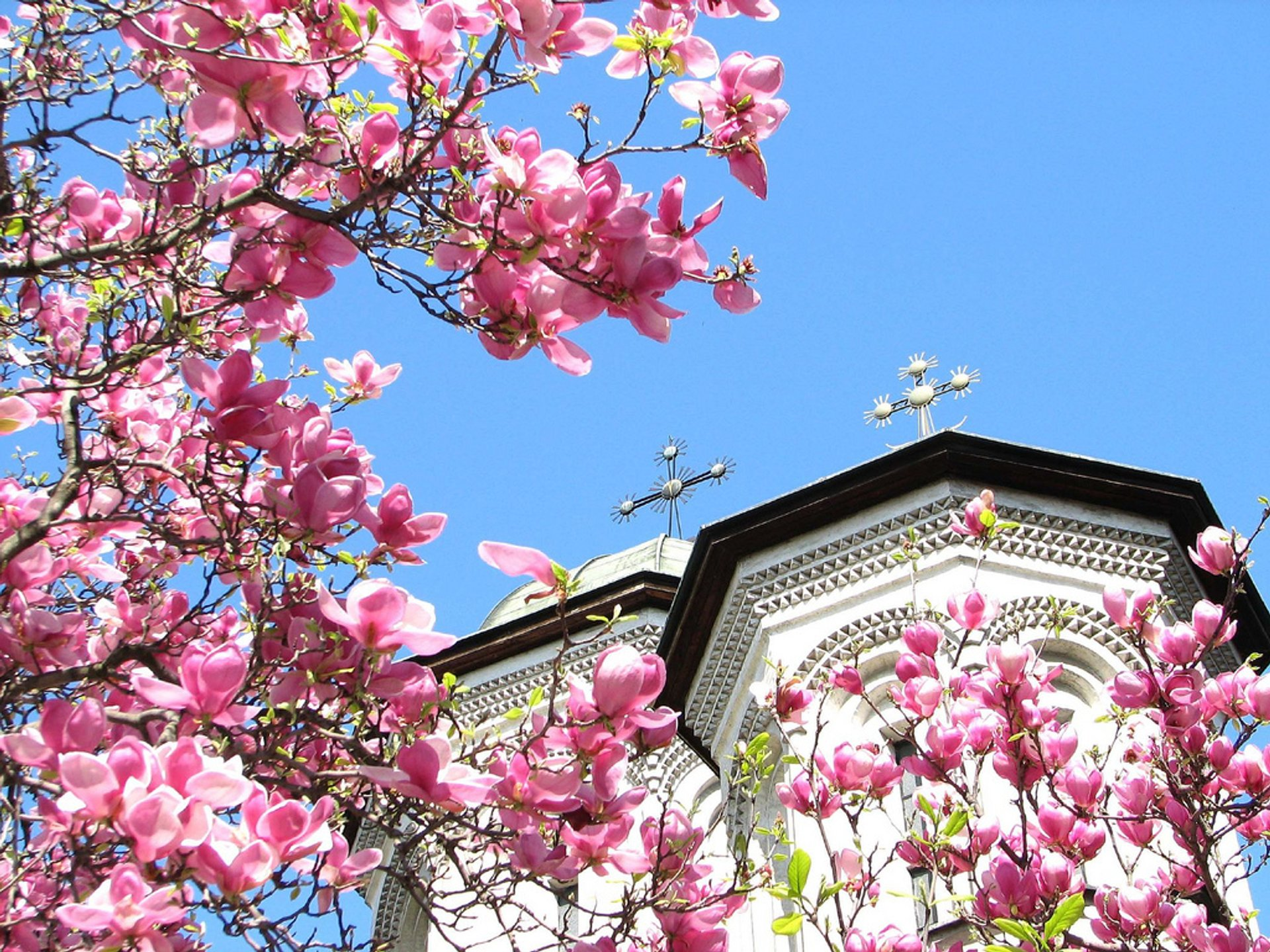Best time to see Magnolias in Bucharest in Romania
