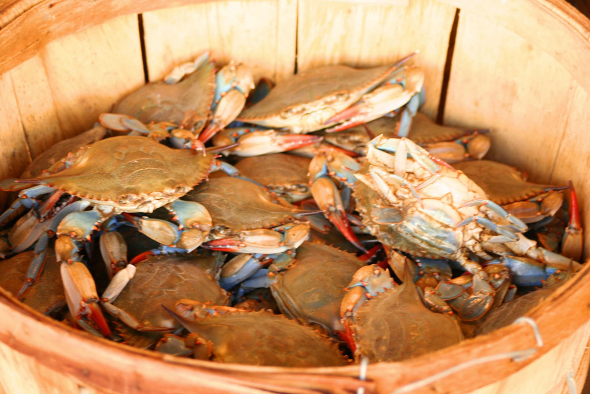 Best time for Chesapeake Bay Blue Crab in Washington, D.C. 2019