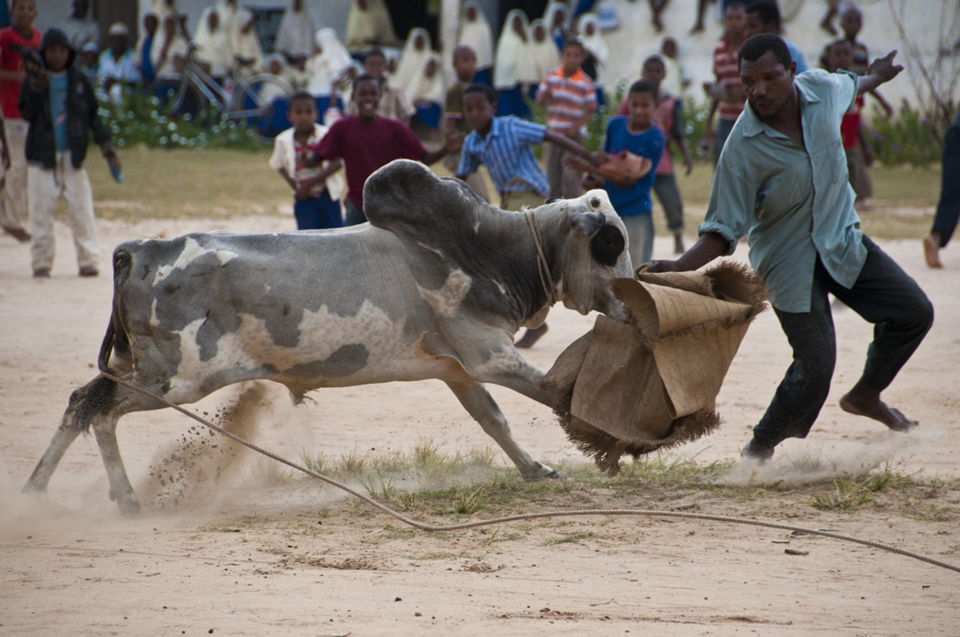 Bullfighting on Pemba Island in Zanzibar - Best Season 2019