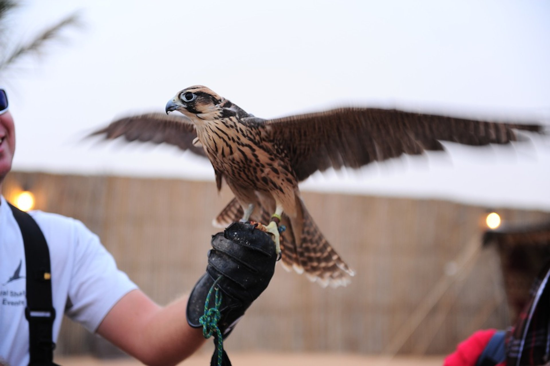 Falconry in Dubai 2020 - Best Time