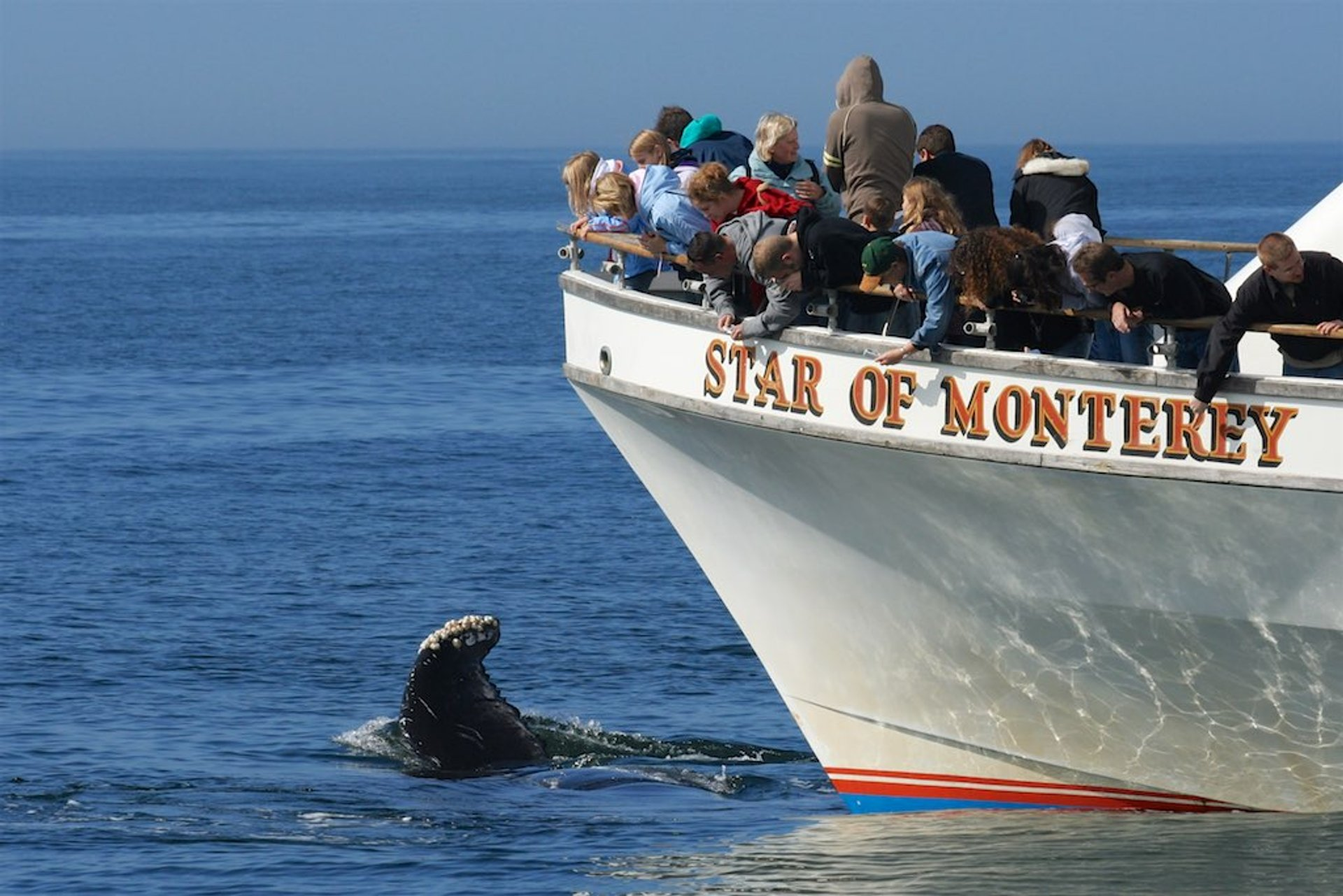 Whale watching in Monterey 2020