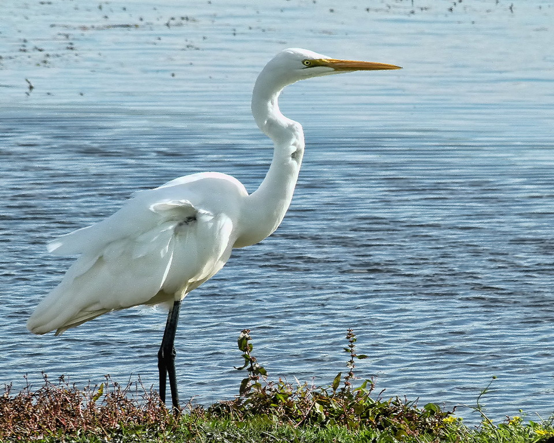 Best time to see The White Heron Sanctuary Tours in New Zealand 2020