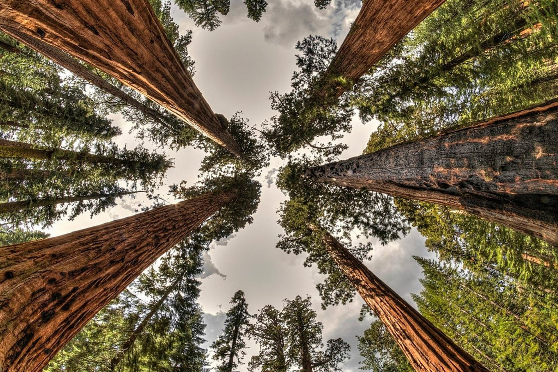 Best time for Giant Sequoias of Yosemite National Park in Yosemite 2020