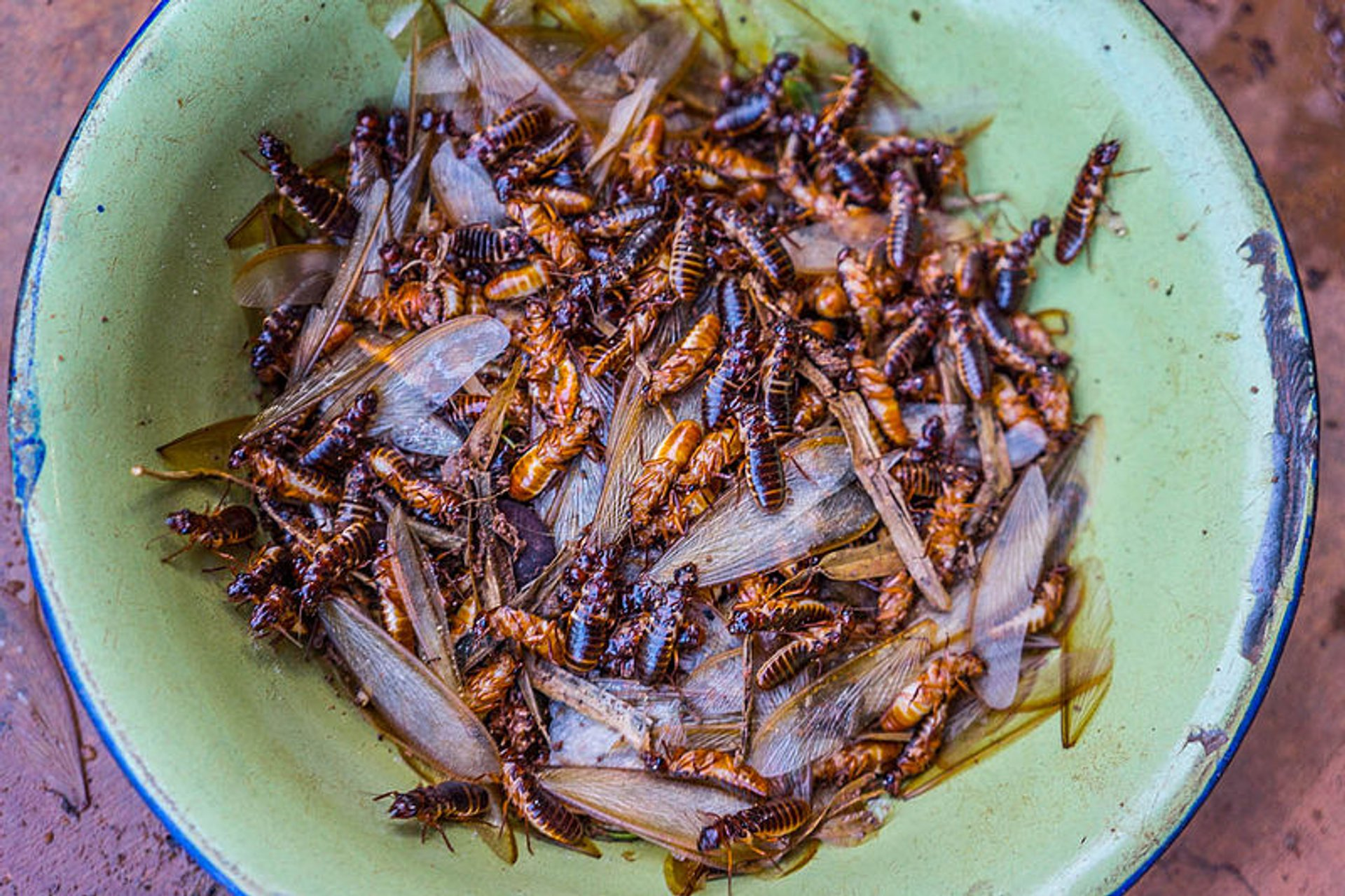 Roasted Termites in South Africa - Best Season 2019