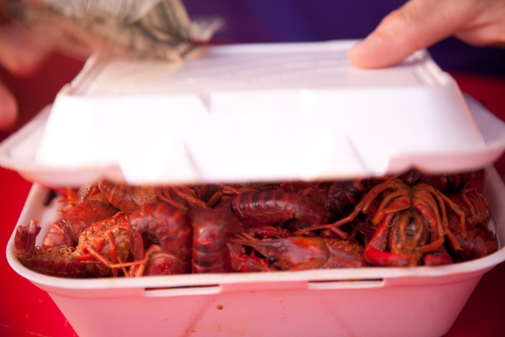 Mudbug Madness Festival in Louisiana - Best Season 2020