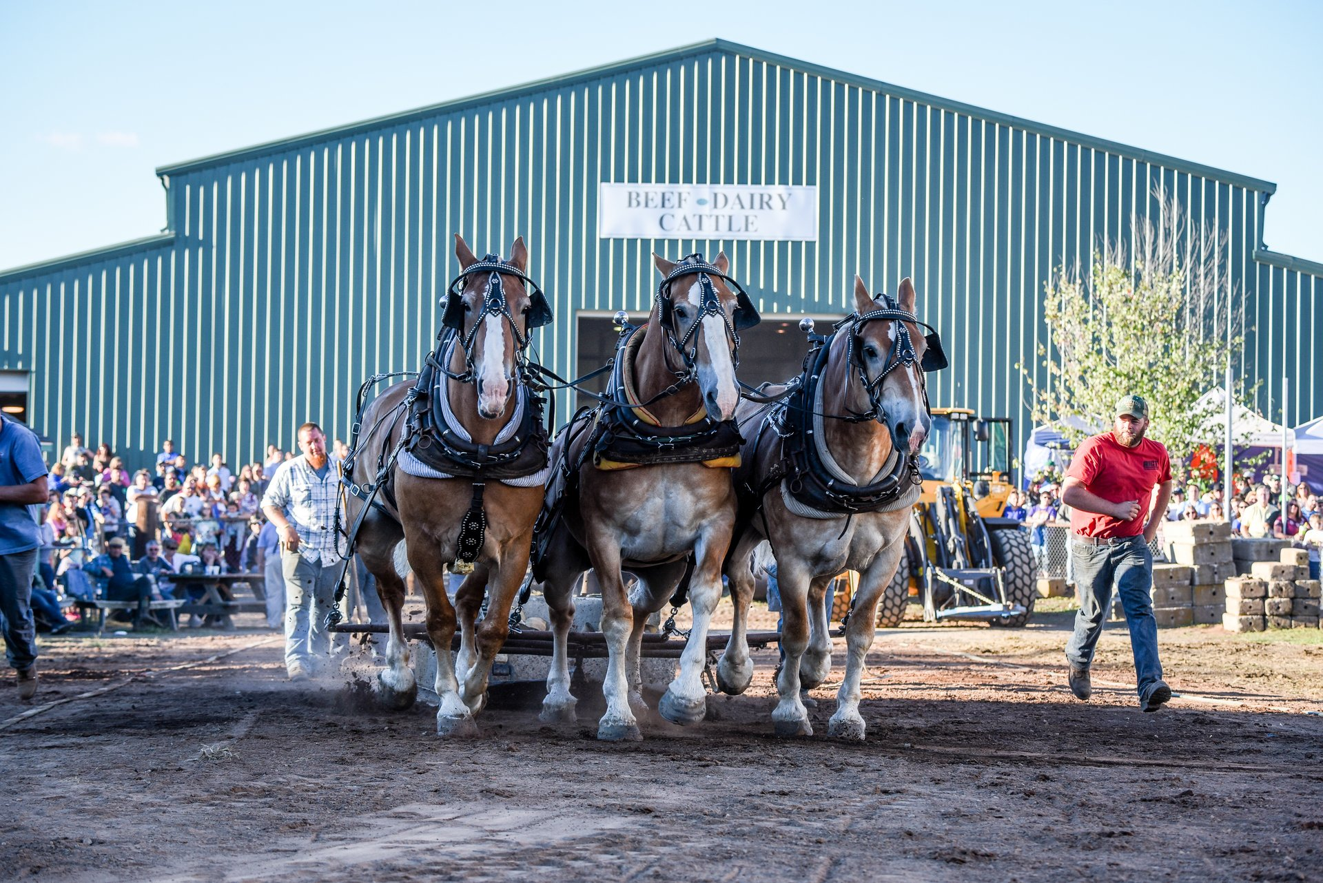 Best time to see Durham Fair 2020