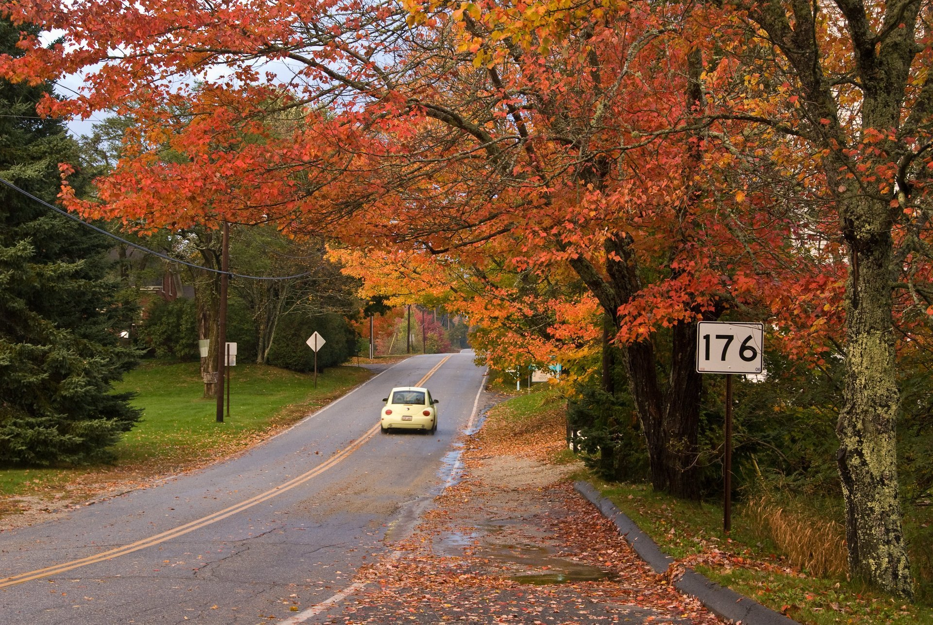 Fall trees in East Blue Hill, Maine 2020