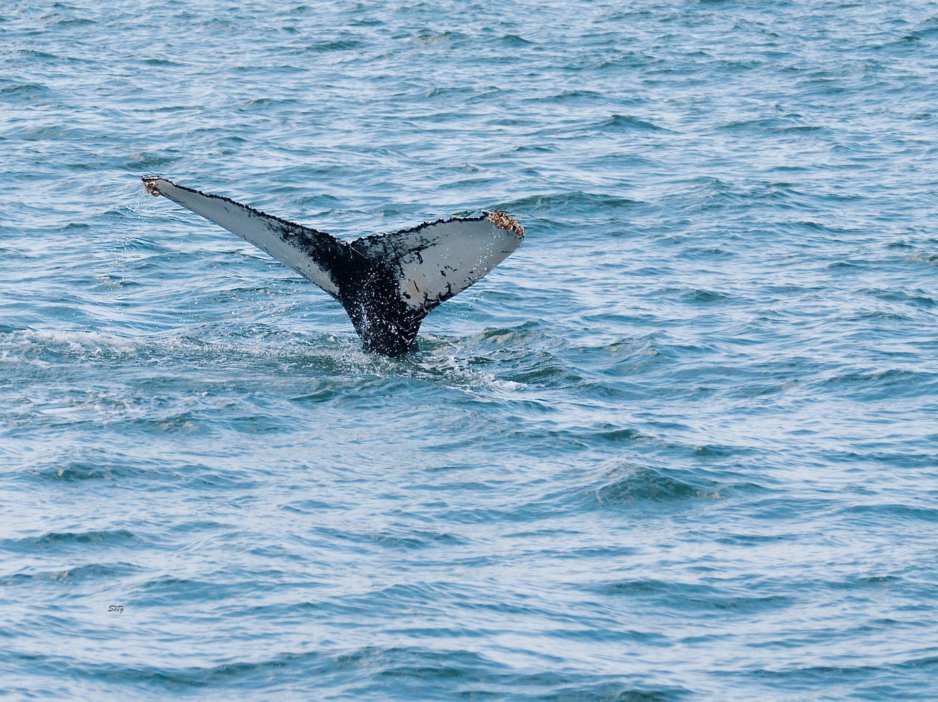 Whale Watching in Virginia Beach in Virginia 2020 - Best Time