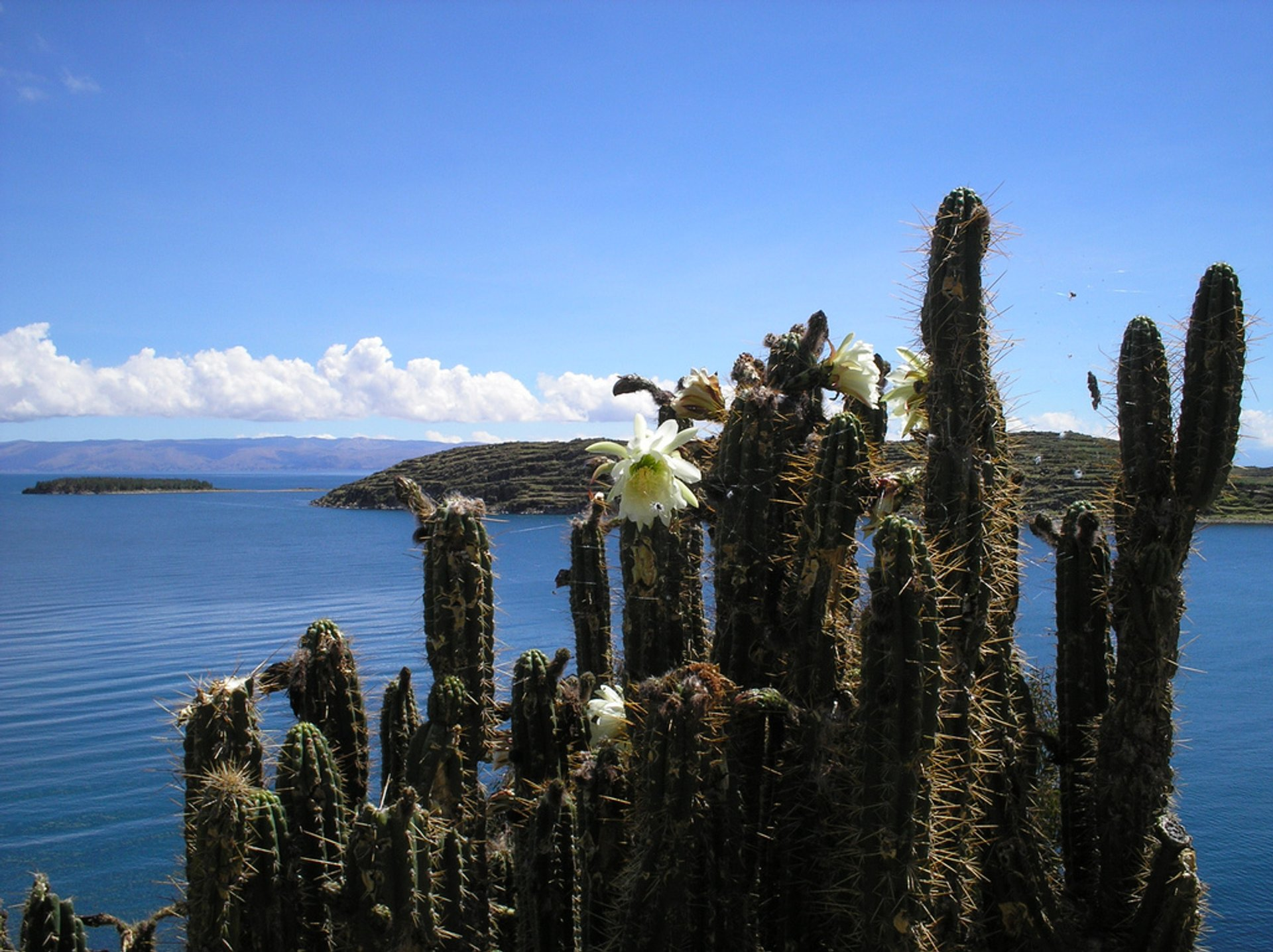 Best time to see Blooming Cacti in Bolivia 2020