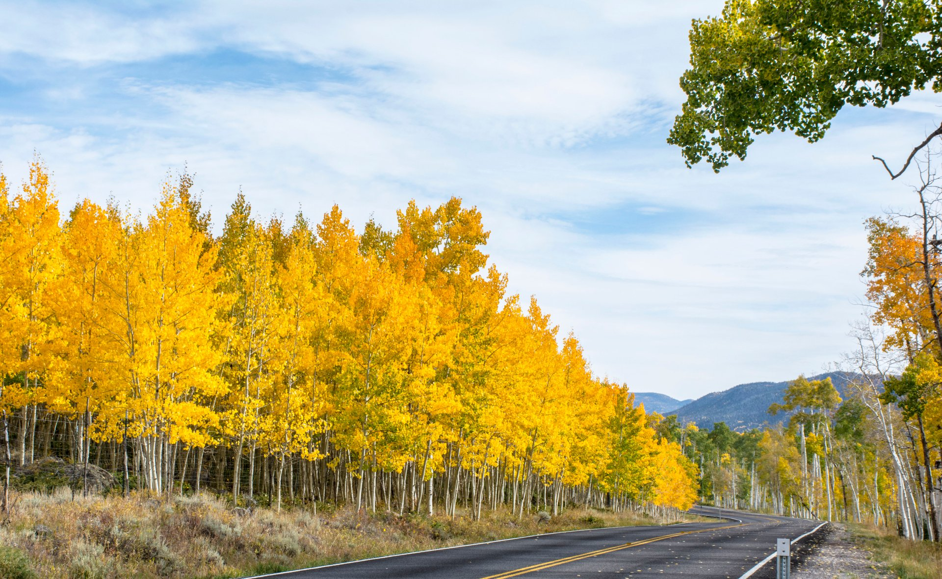 Pando, the Trembling Giant in Utah 2020 - Best Time