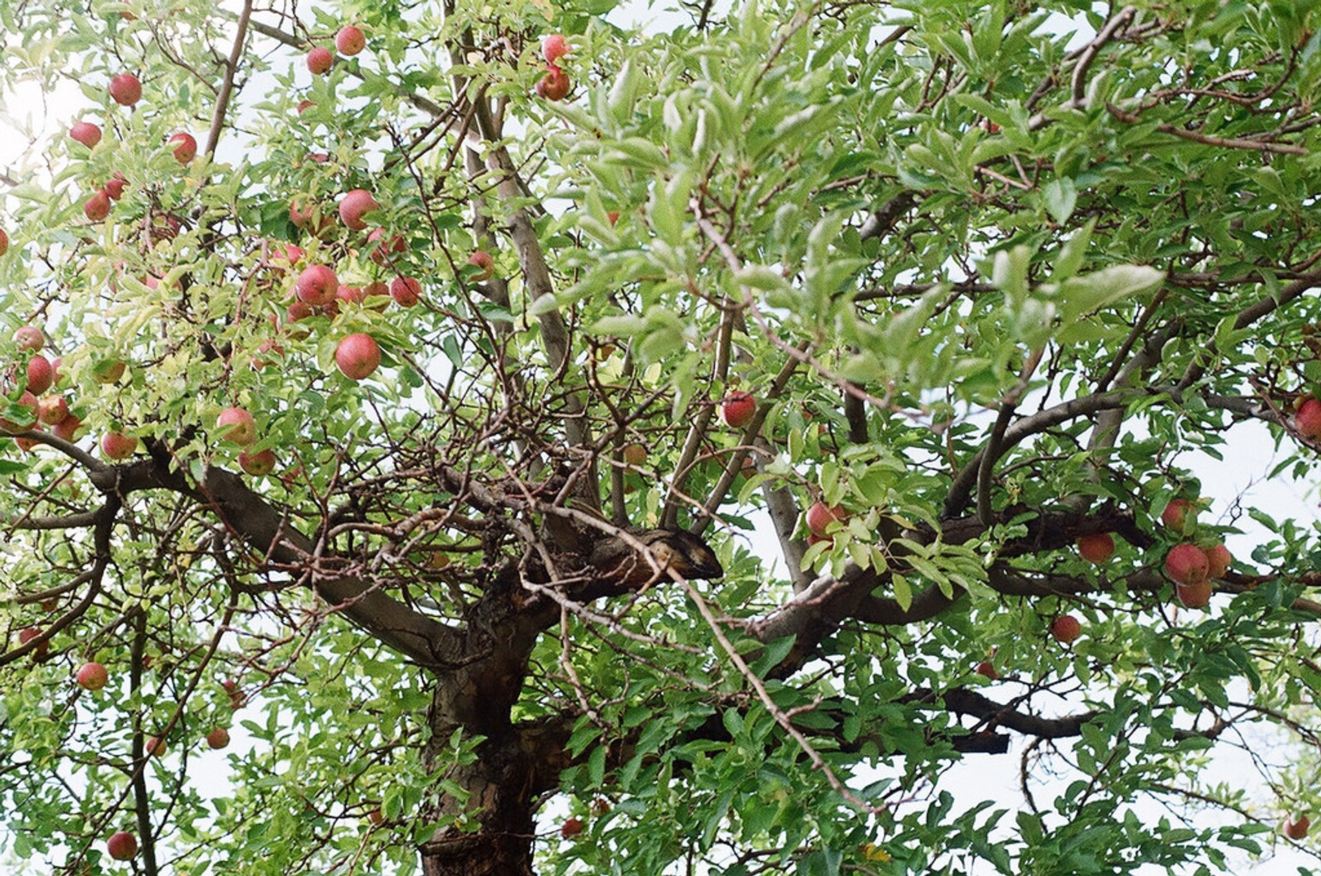 Best time for Capitol Reef Orchards in Utah 2019