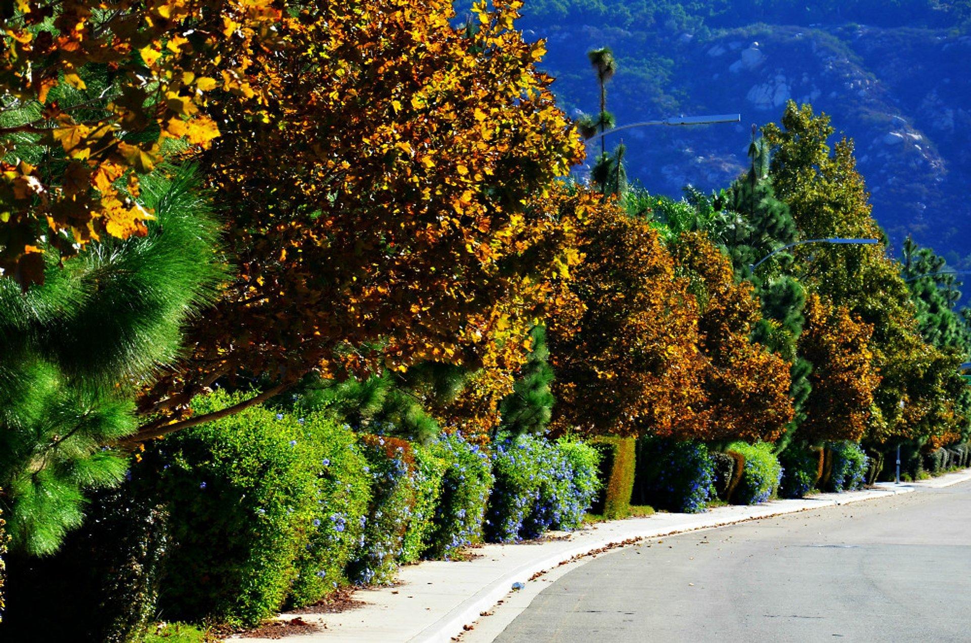 Crisp fall morning in San Diego, Southern California 2020