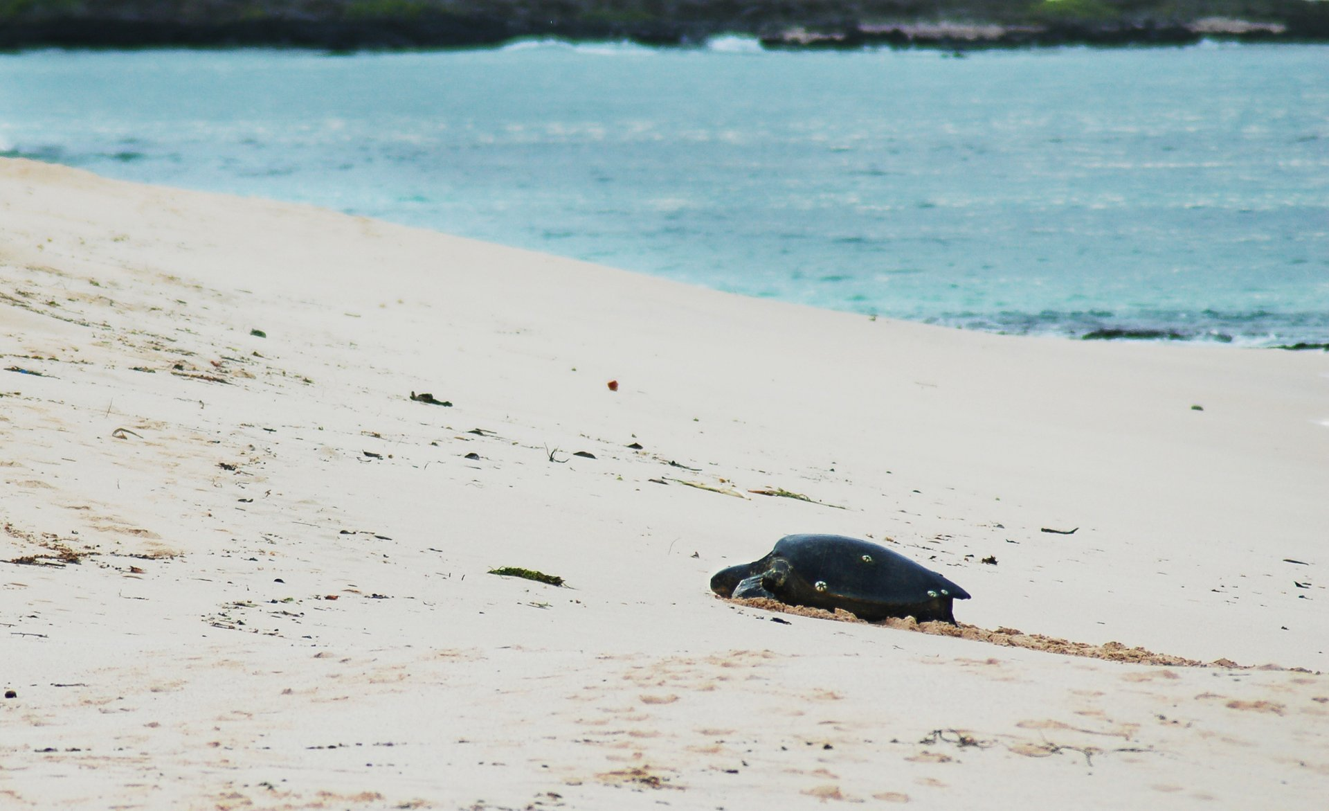Green Turtles in Galapagos Islands - Best Time