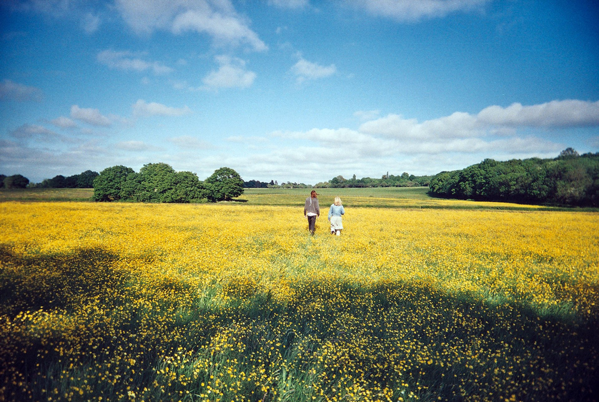 In a Field of Buttercups, July 2020
