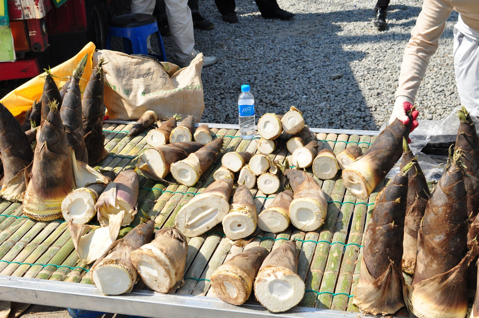 Edible bamboo shoots on sale 2020
