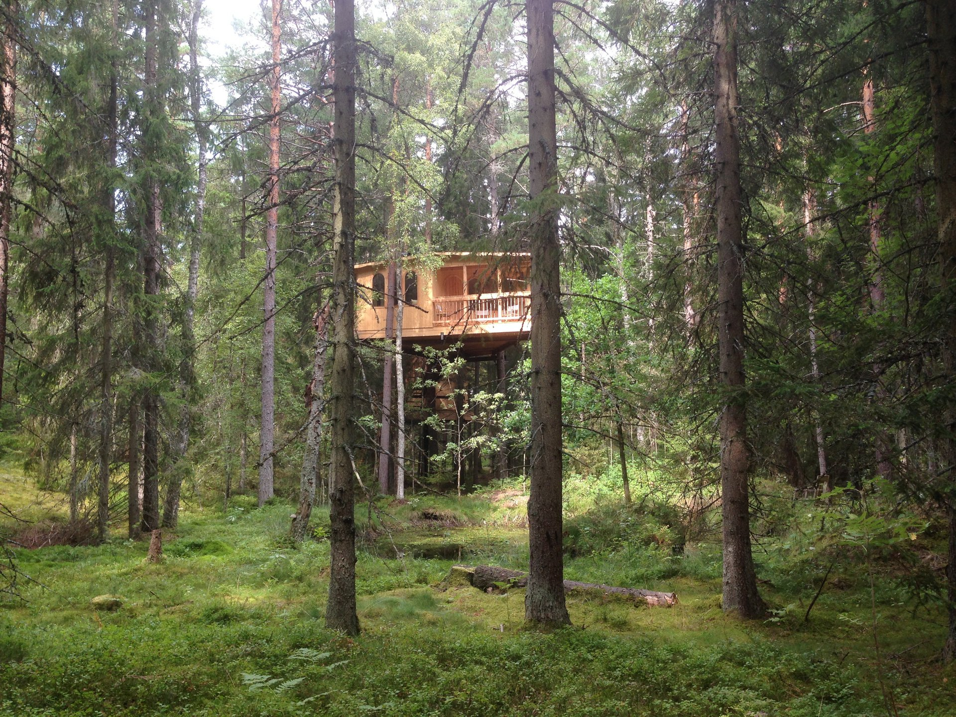 Tree House Hotel in Sweden 2019 - Best Time
