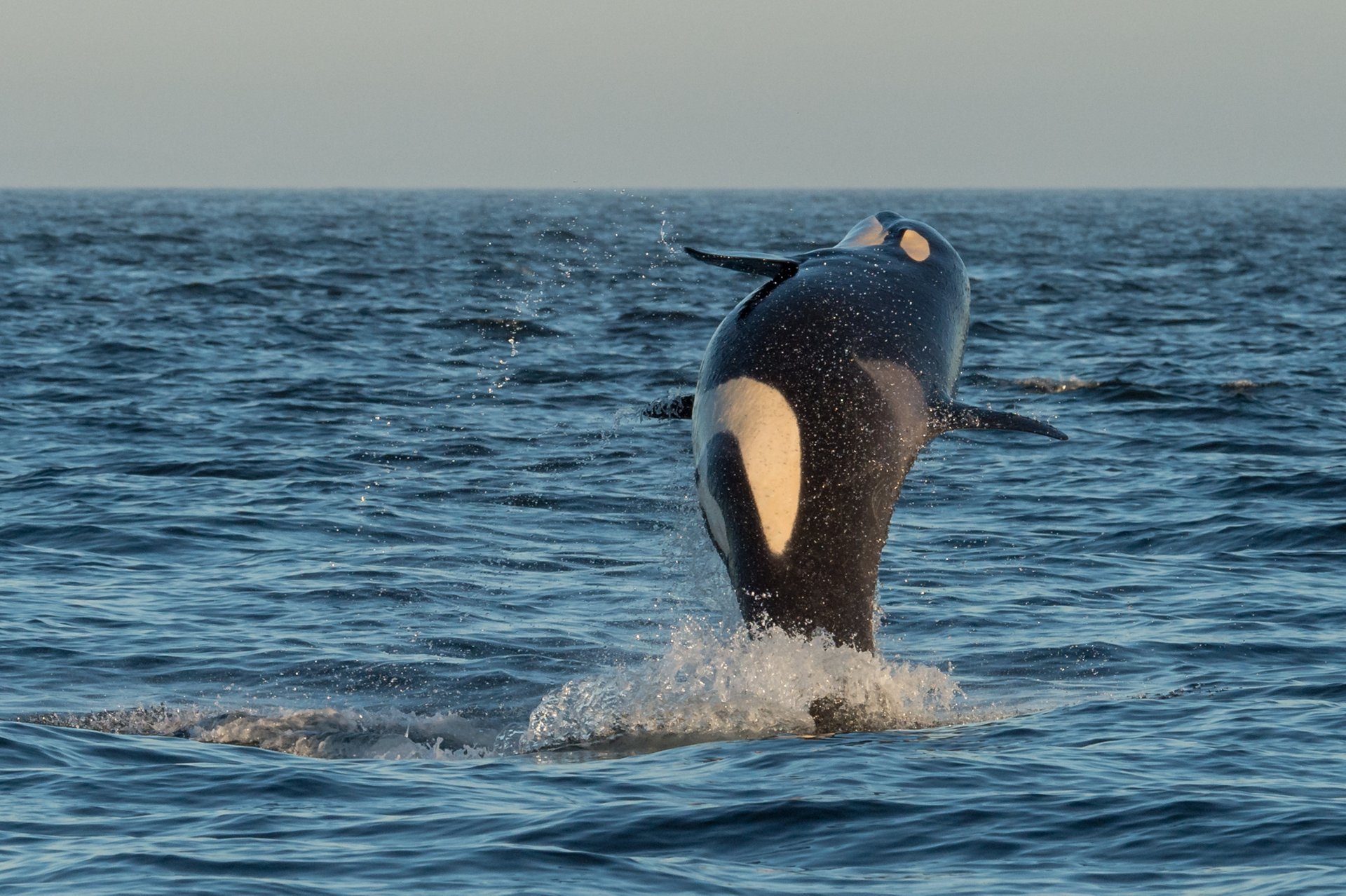 Whale Watching in British Columbia 2020 - Best Time