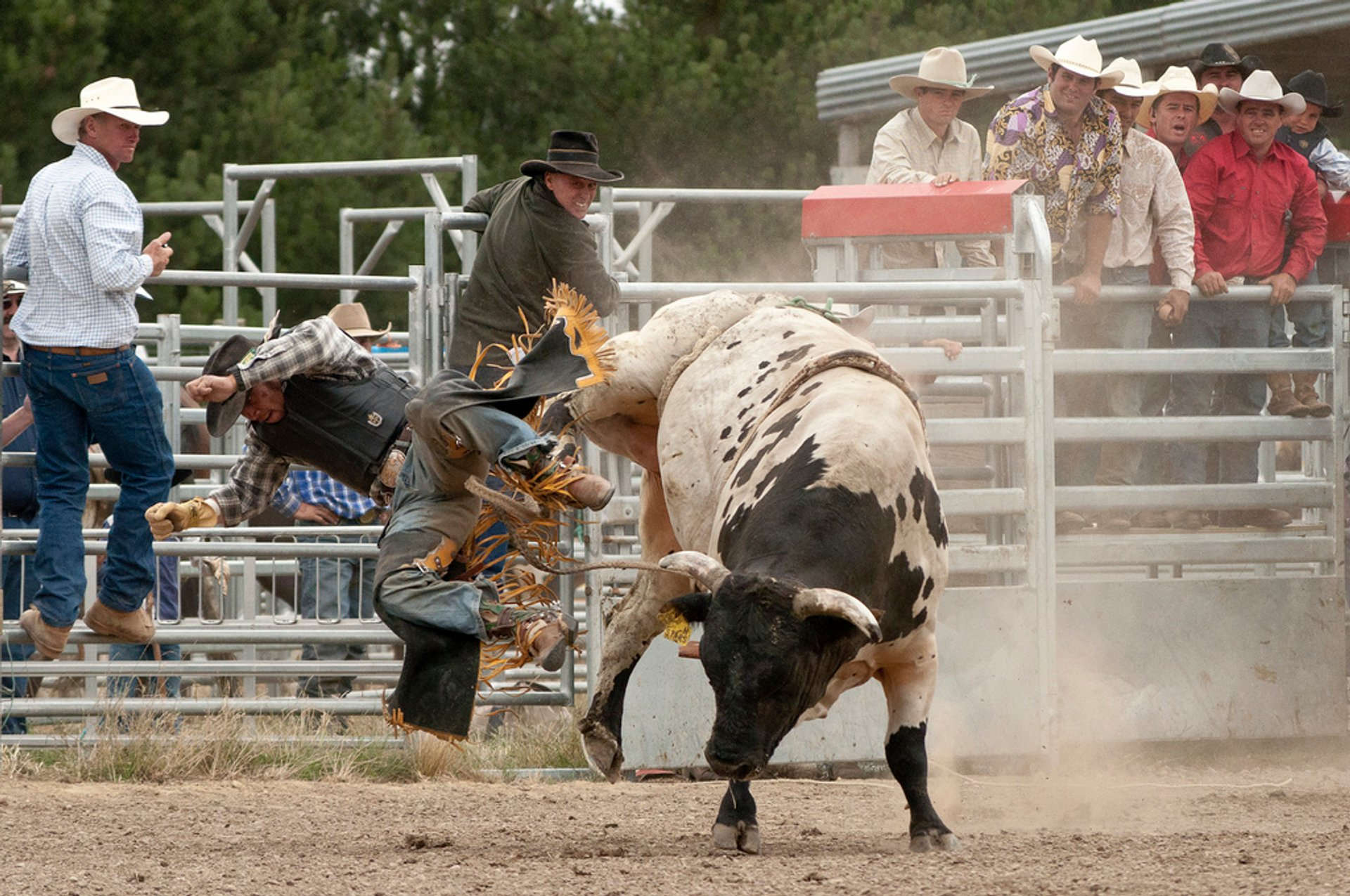 Best time for Rodeo in New Zealand 2020