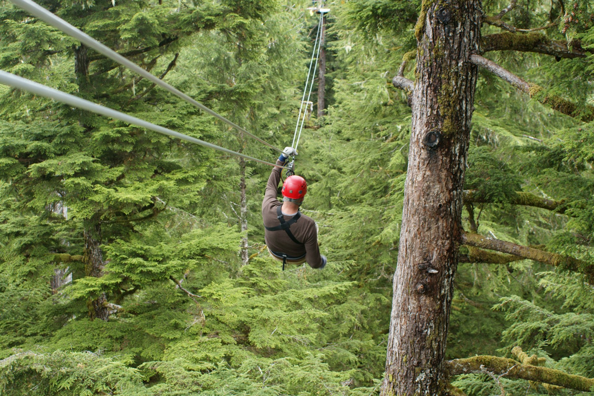 Rainforest Ziplining in Alaska 2020 - Best Time