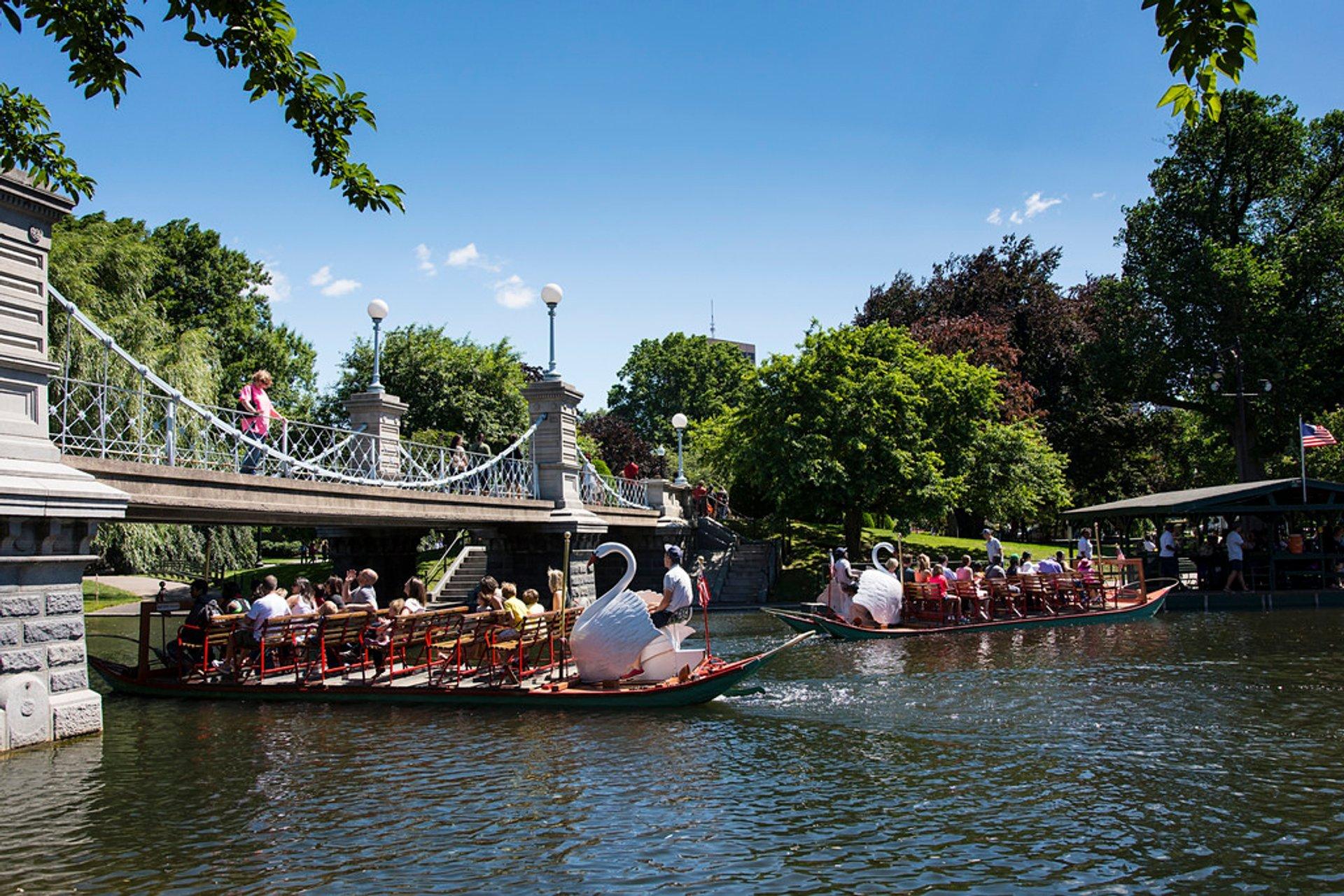 Swan Boats in Boston 2020 - Best Time