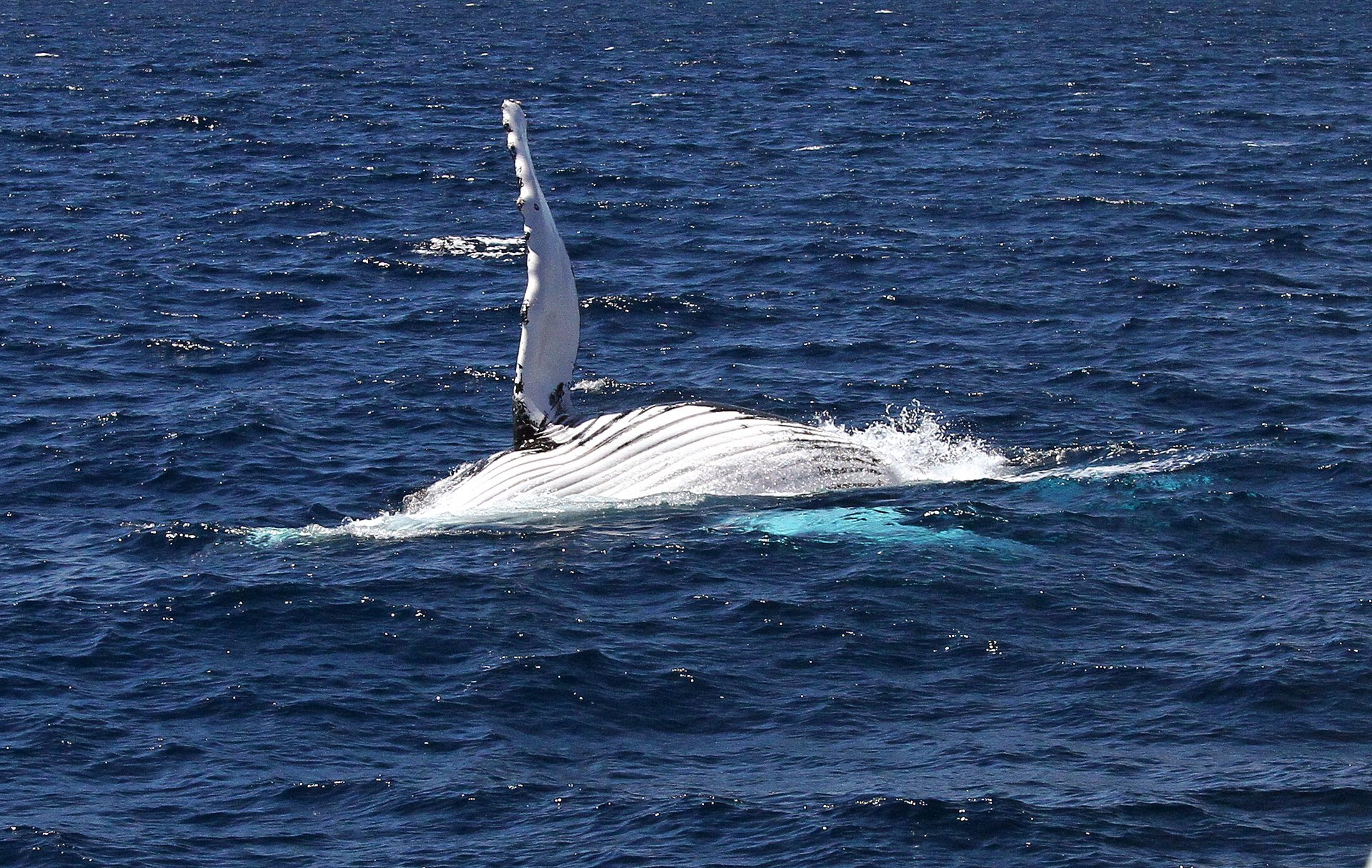 Relaxing Humpback out of Busselton 2020
