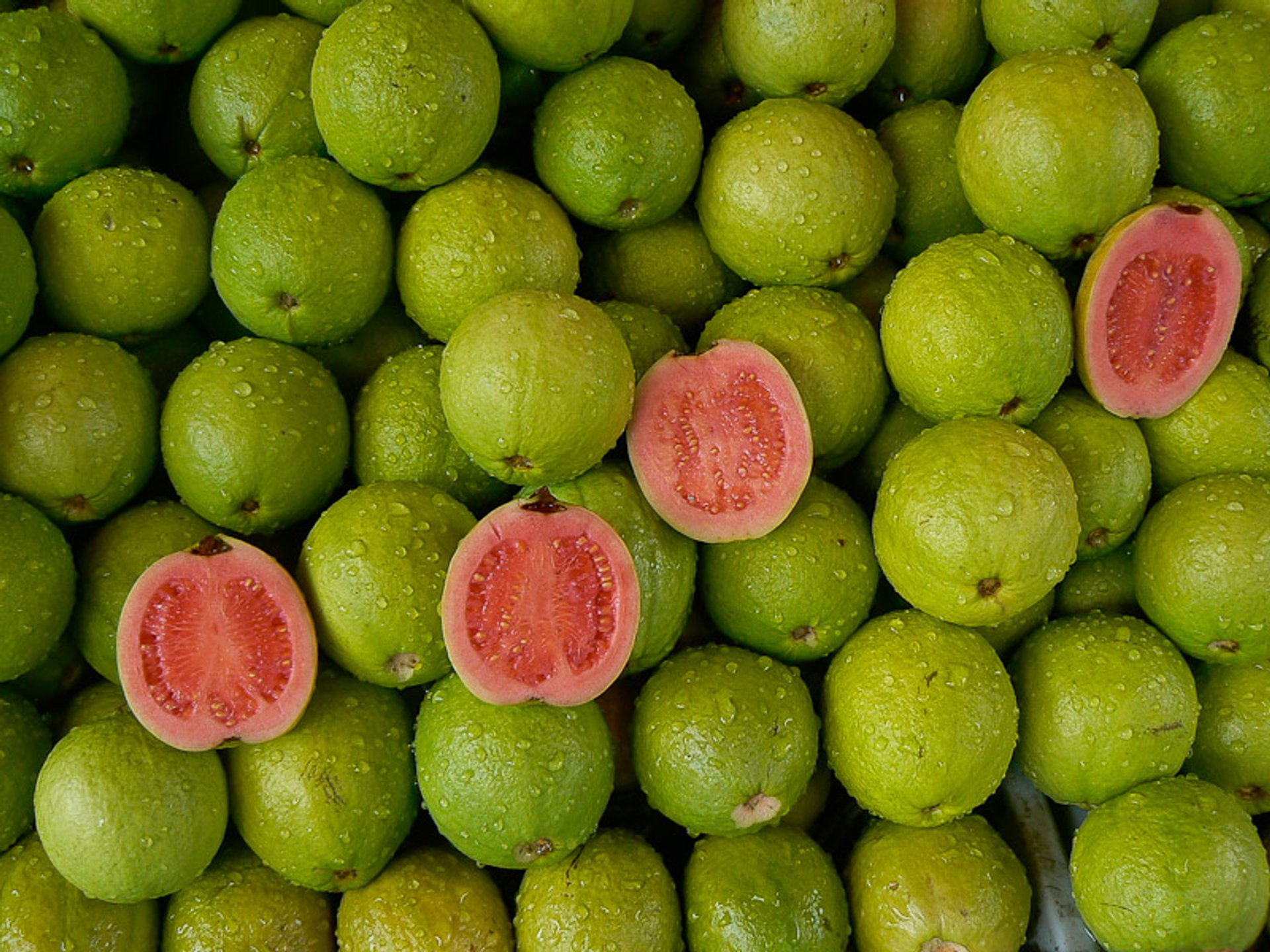 Guava in Taiwan - Best Season