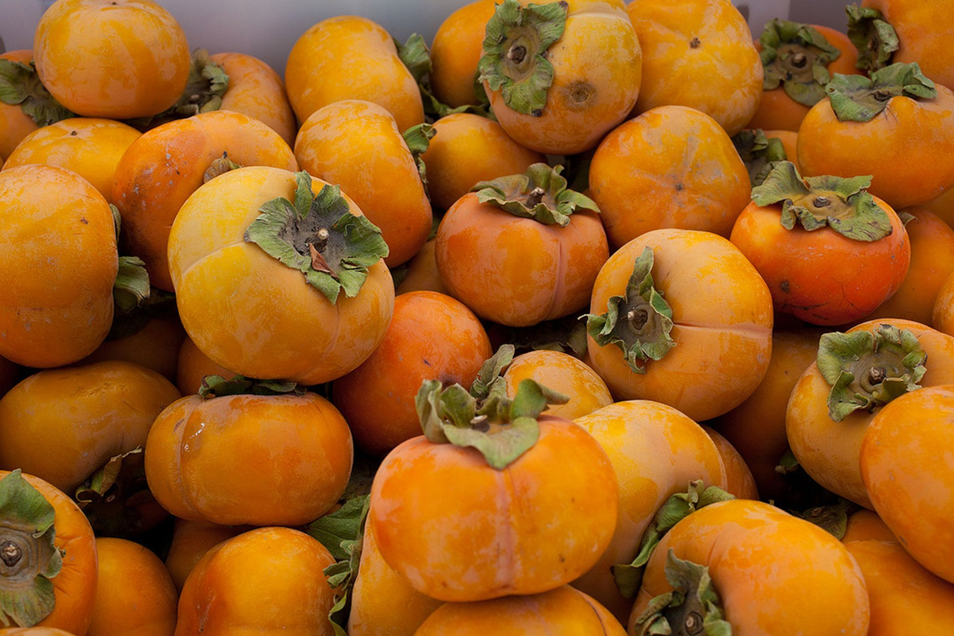 Fuyu Persimmons in San Francisco 2020 - Best Time