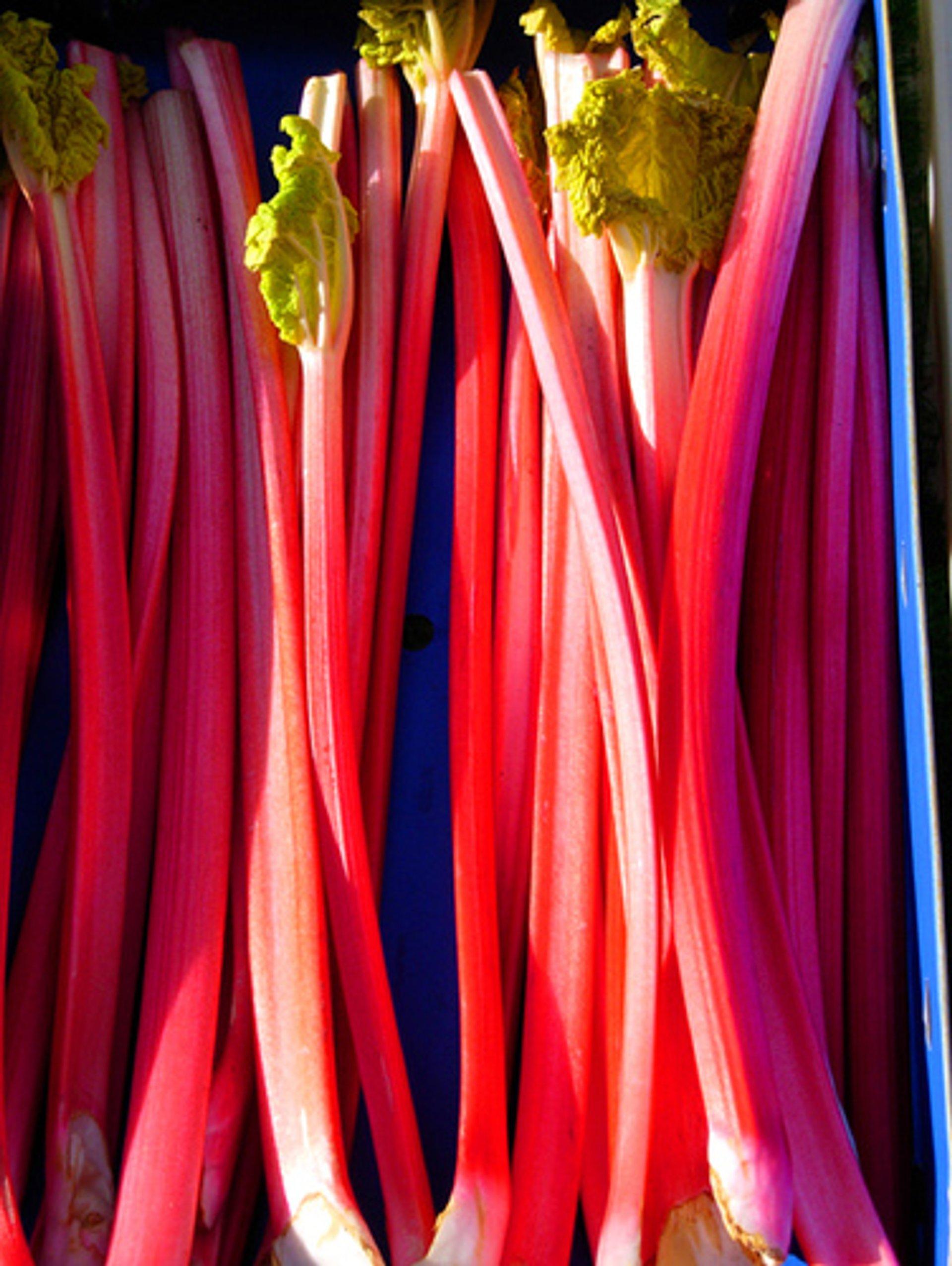 Spring rhubarb 2020