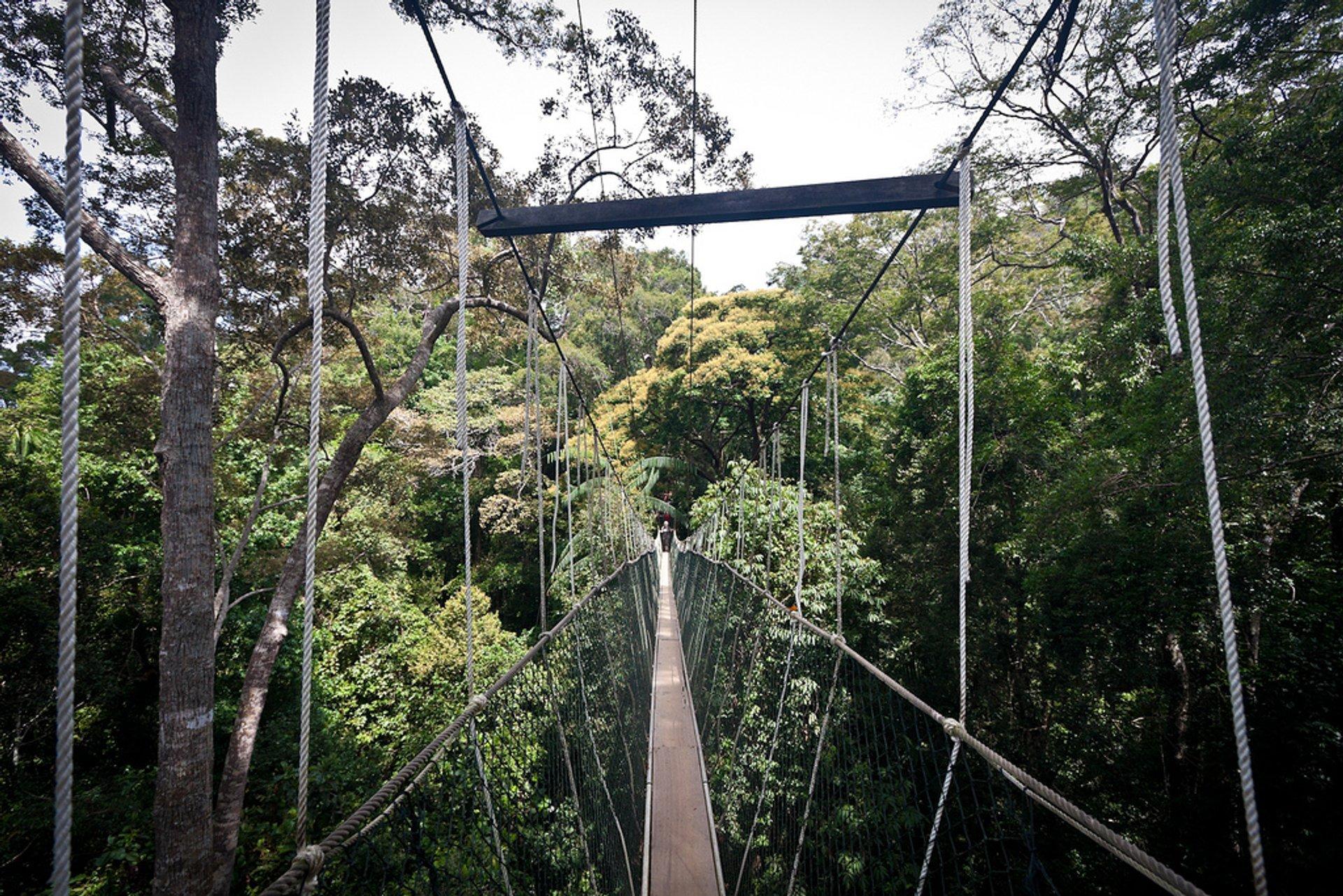 Canopy Walks in Peninsular Malaysia in Malaysia 2020 - Best Time