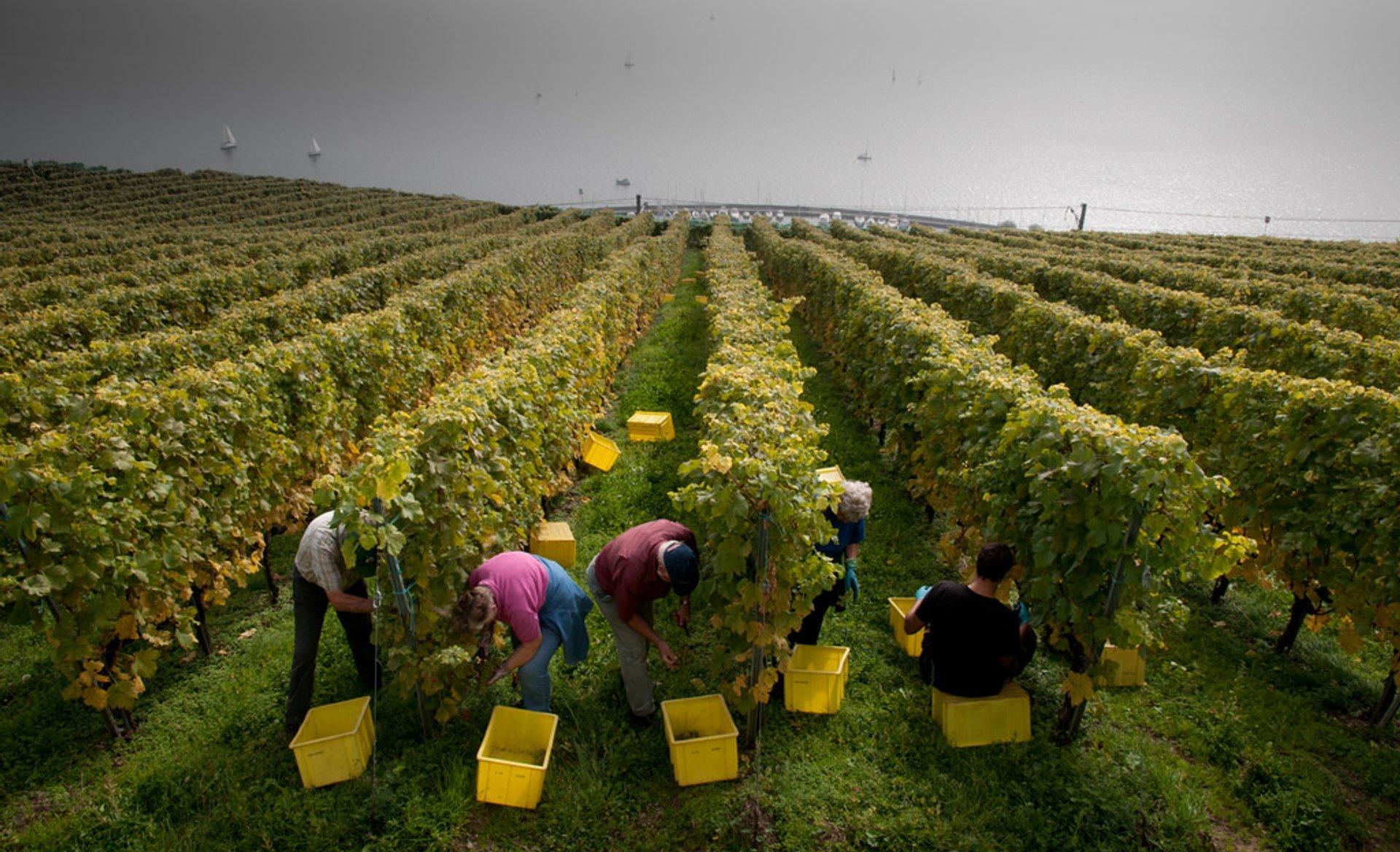 Harvest time 2020