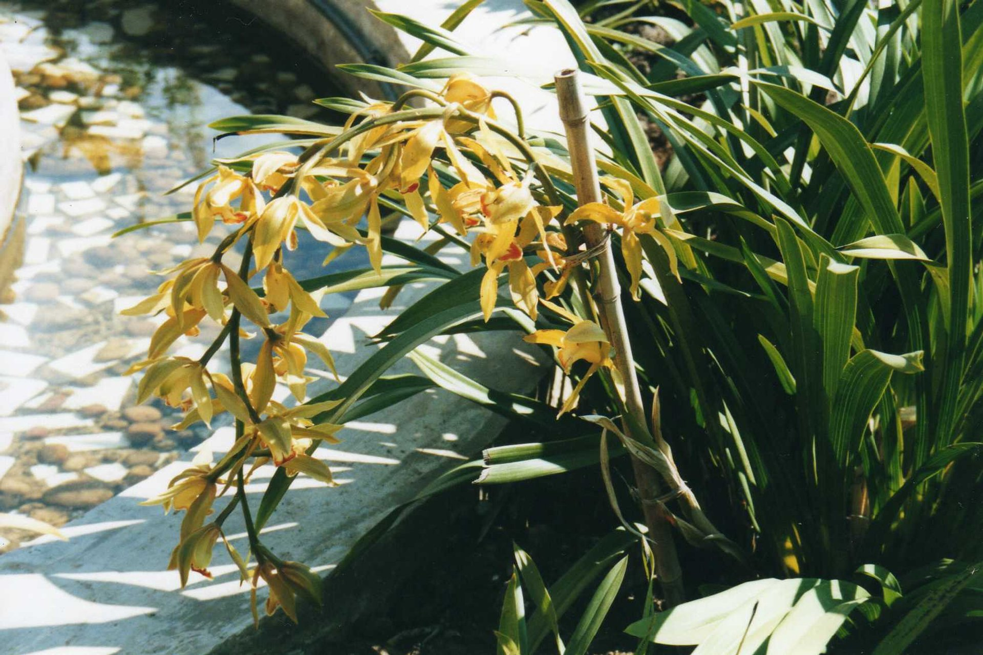 Orchids Spotting in Madagascar - Best Season
