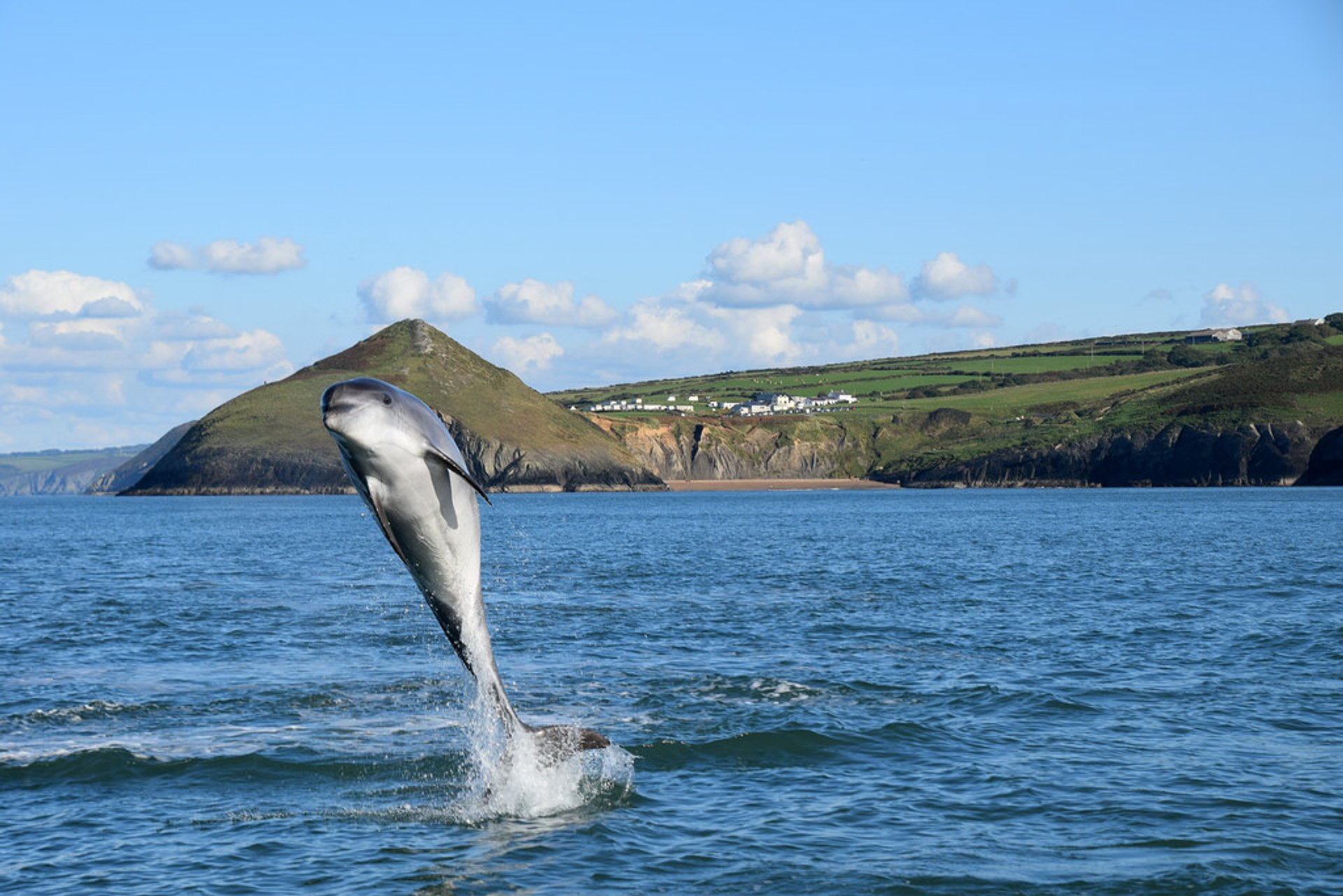 Bottlenose Dolphins in Cardigan Bay in Wales 2020 - Best Time
