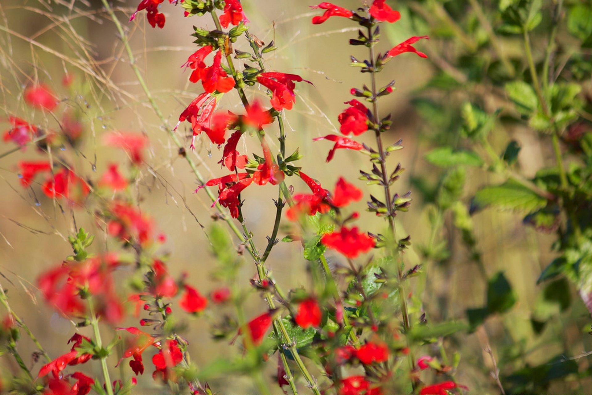 Naples Botanical Garden 2020