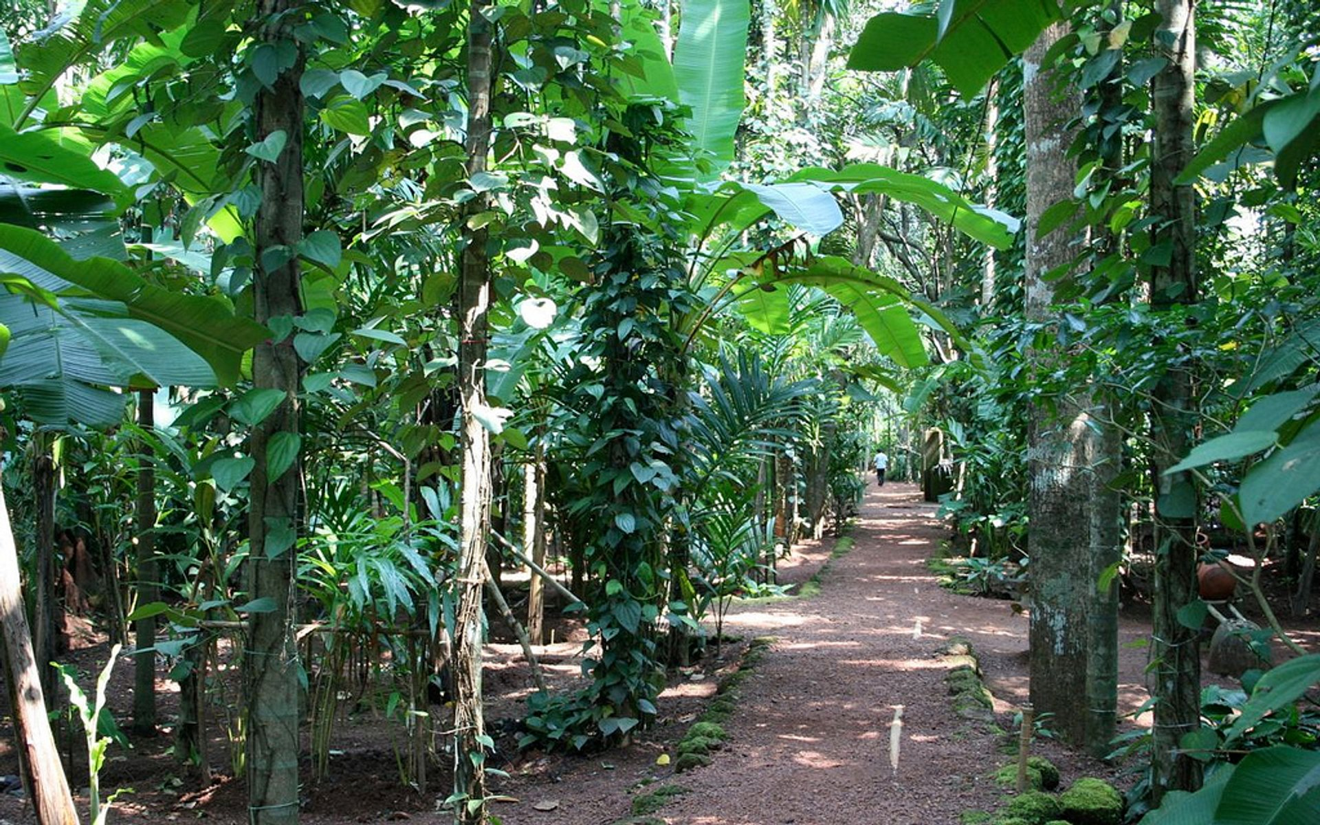 Spice garden on Tropical Spice Farm, Ponda 2019