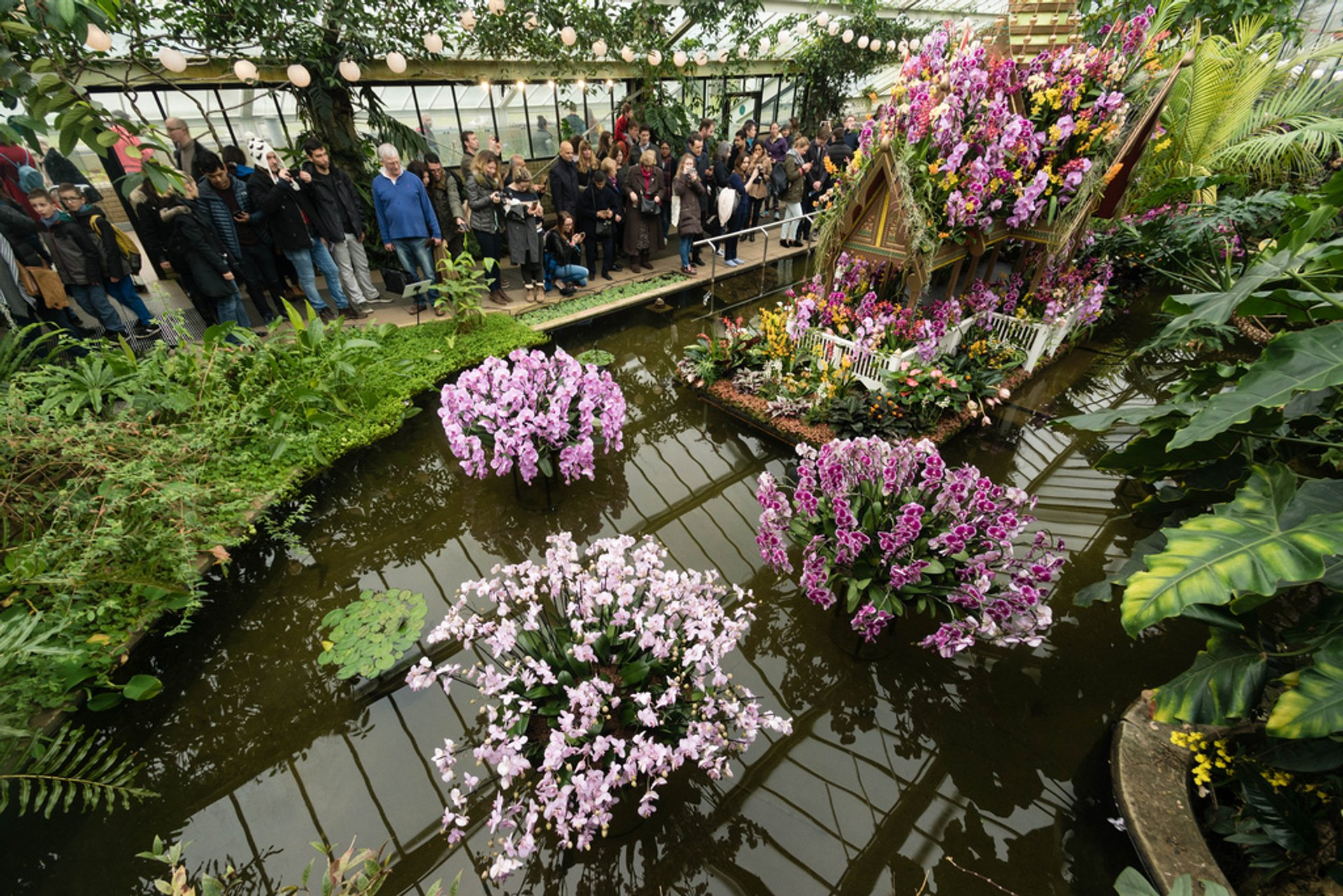 Orchids Festival at Kew Gardens in London 2020 - Best Time