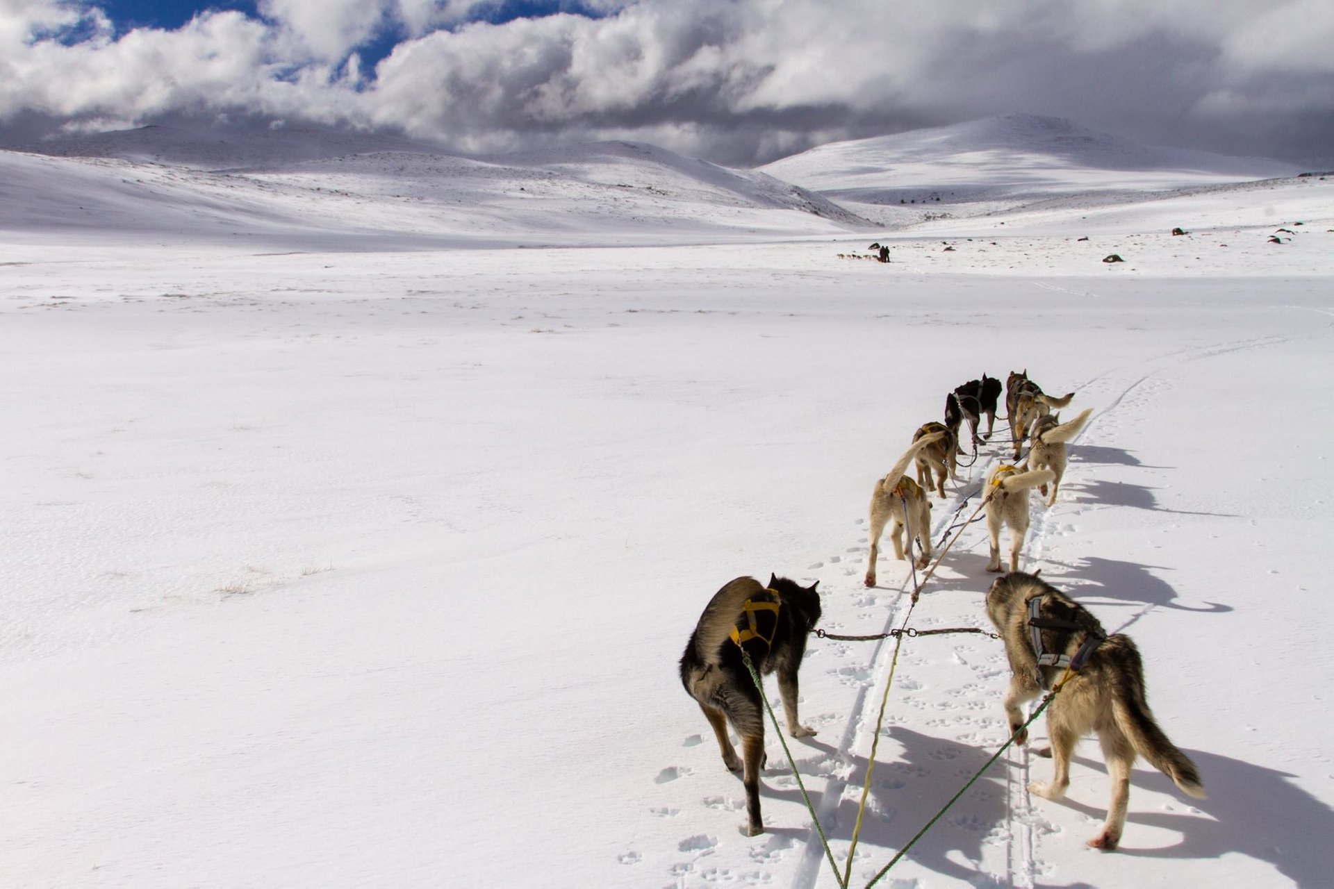 Dog Sledding in Patagonia 2020 - Best Time
